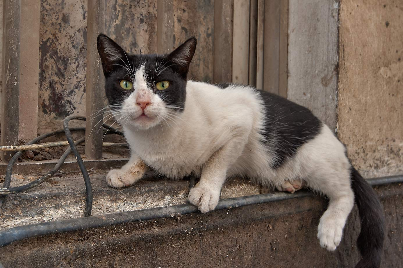 Frightened cat in Central Manama. Bahrain
