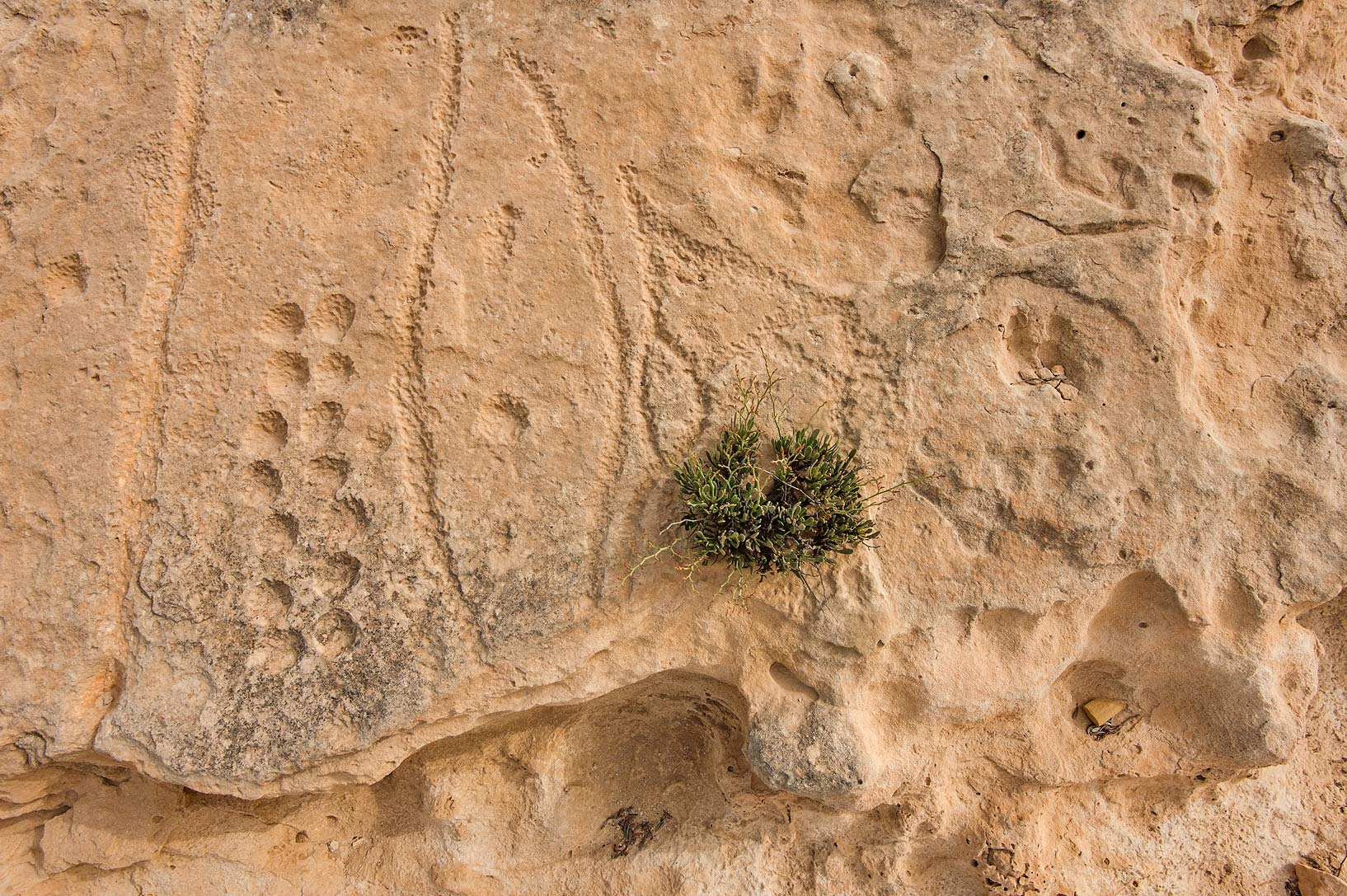 Al jassasiya rock carvings qatar search in pictures