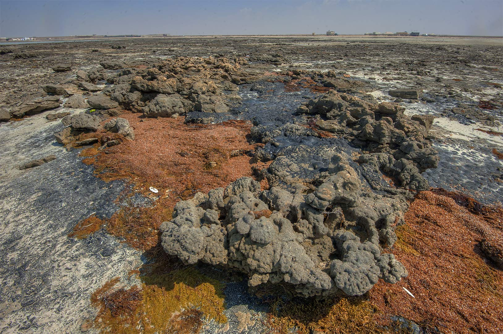 Beachrock covered by oil in Fraiha near Palace of...Al-Abdullah Al-Thani. Northern Qatar