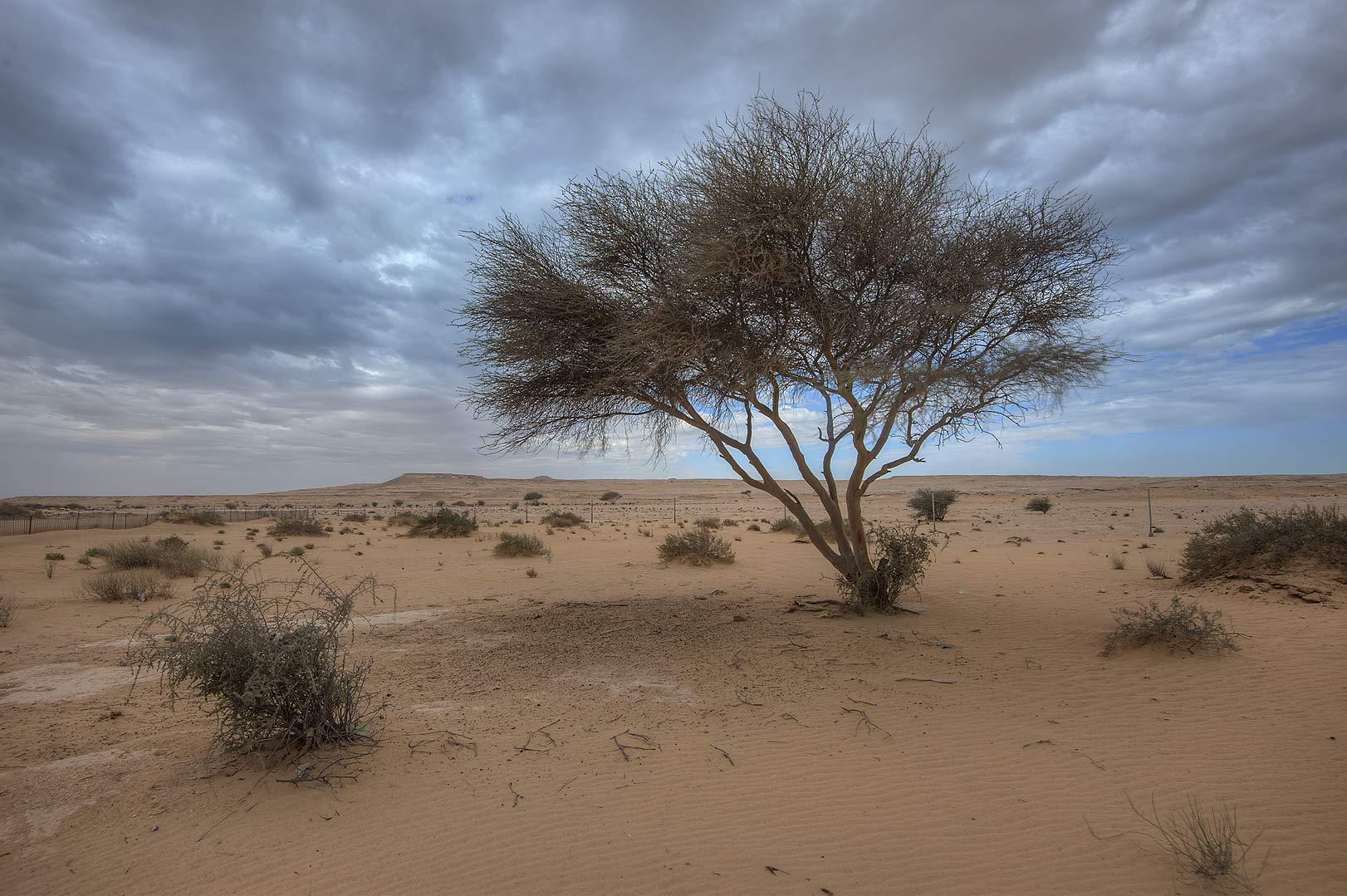 Album Abu Samra Qatar March 21 2015 Acacia Tree