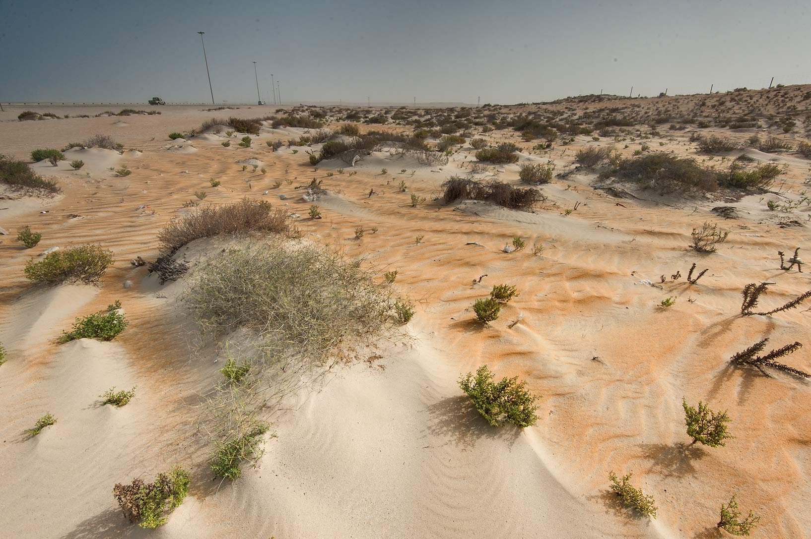 Sandy depression on roadside of Salwa Rd. in area of Rawdat Ekdaim. Southern Qatar