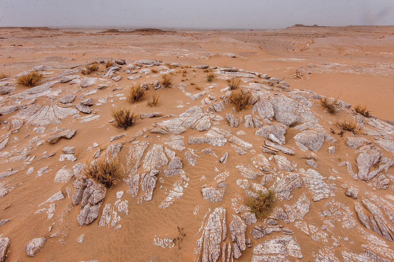 Slabs of gypsum crystals (selenite) in area of...near Salwa Rd. in southern Qatar