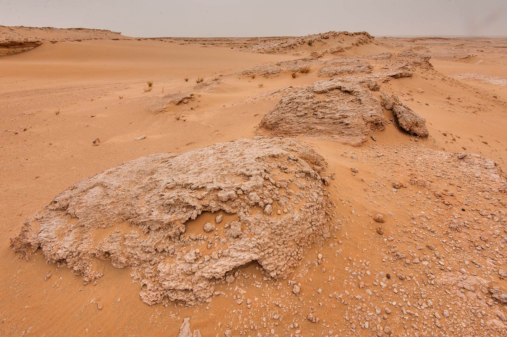 Fossilised intertidal stromatolites (microbial...near Salwa Rd. in southern Qatar