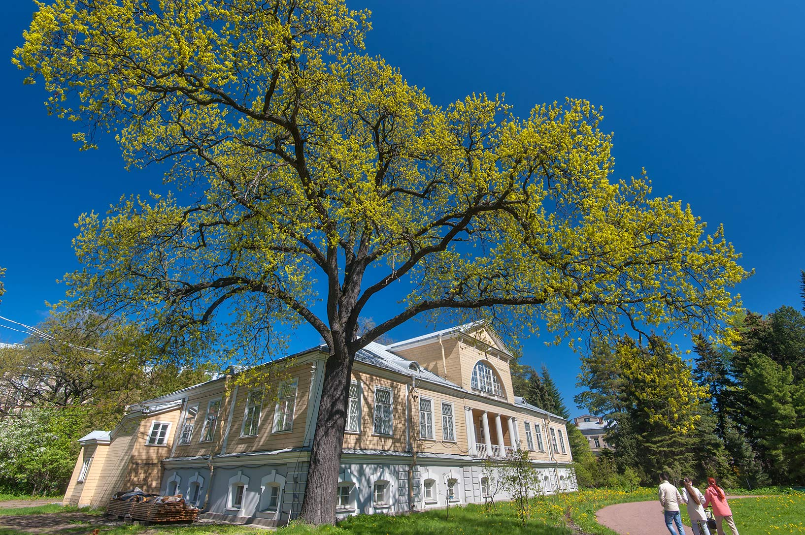 Oak tree in Botanic Gardens of Komarov Botanical Institute. St.Petersburg, Russia