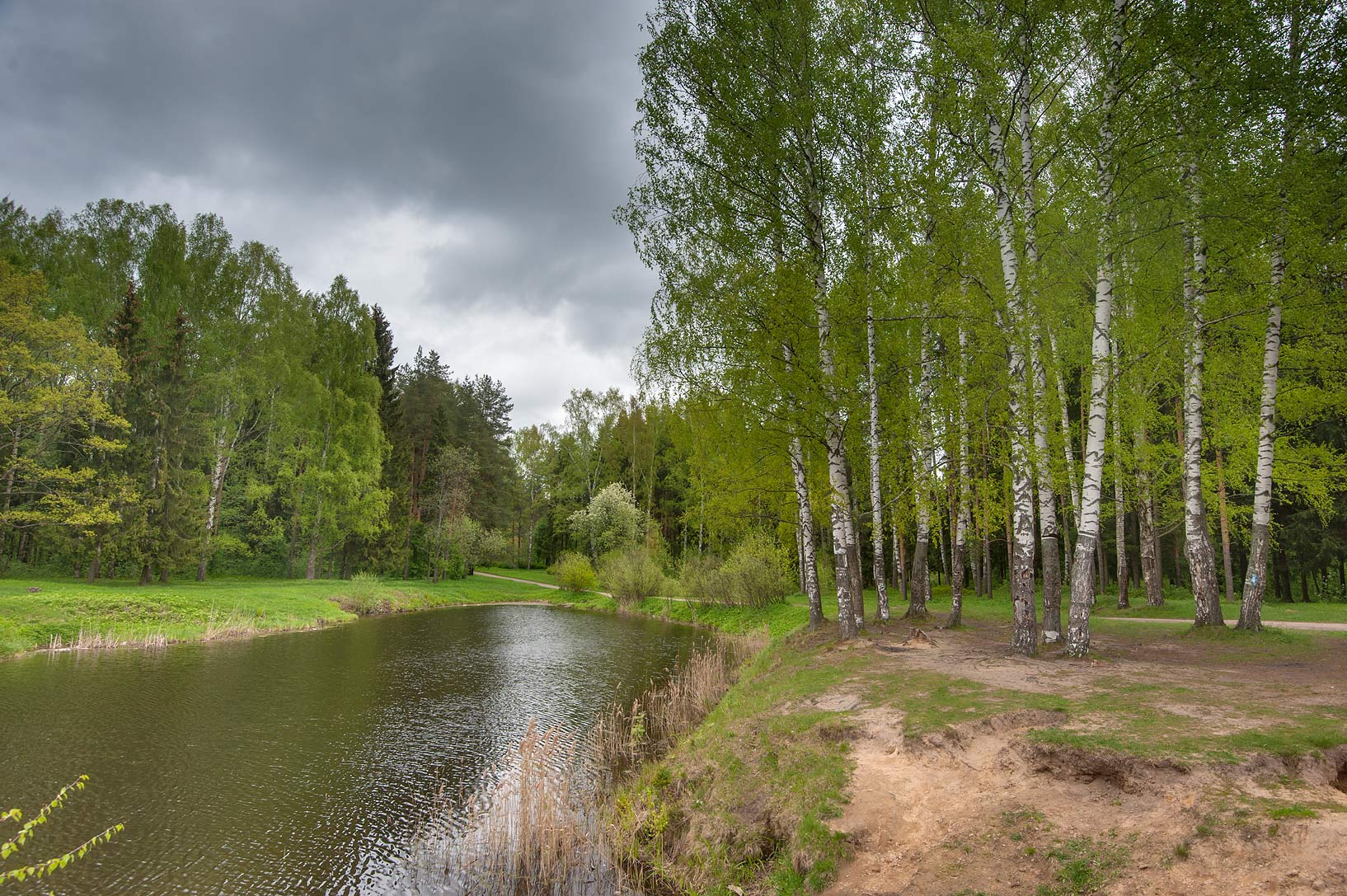 Birches and a pond near Krasnogo Solntsa (Red Sun...suburb of St.Petersburg, Russia