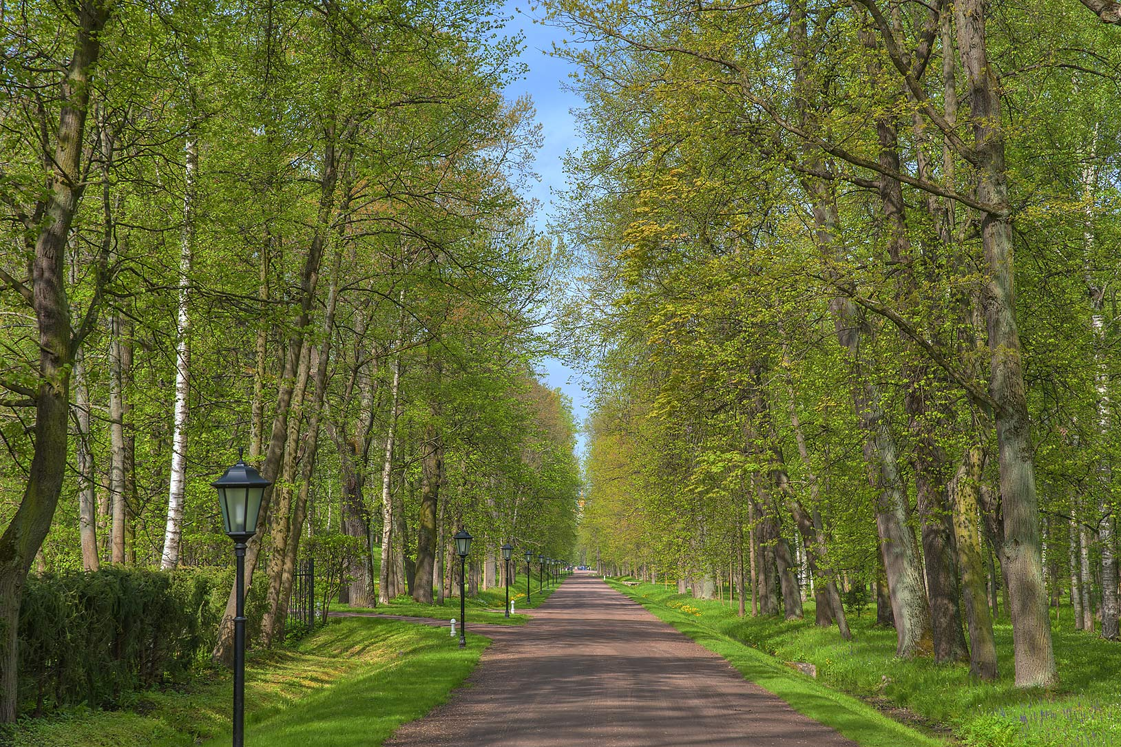 Central alley in Alexandria Park in Peterhof, west from St.Petersburg. Russia