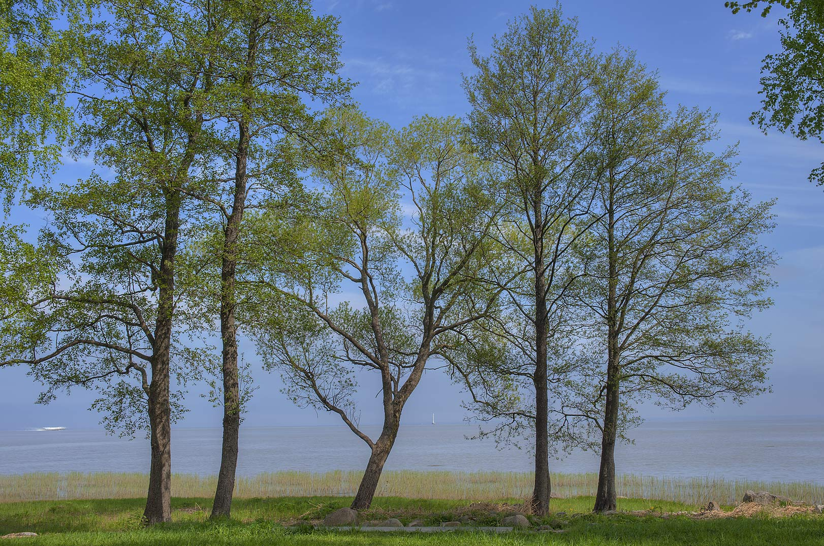 Group of trees on the shore of Gulf of Finland in...west from St.Petersburg. Russia
