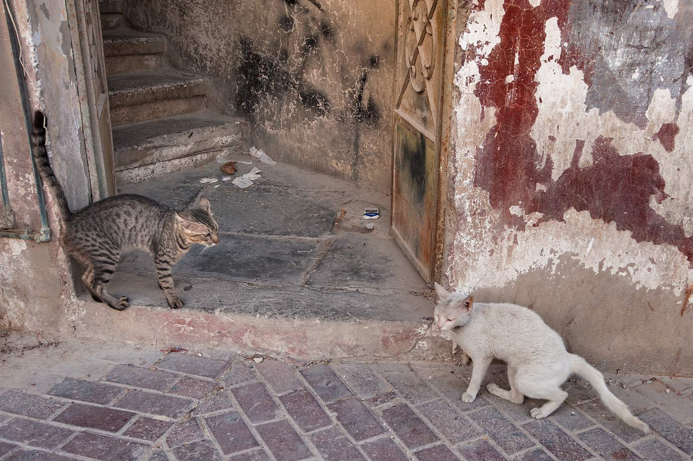 Two cats meeting at Al Asmakh St., Musheirib area. Doha, Qatar