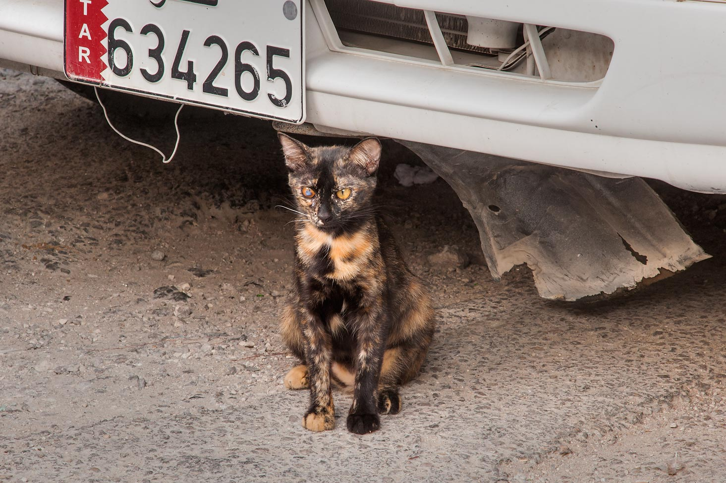 Tortoiseshell cat sitting under a car on Al Jassasiya St., Musheirib area. Doha, Qatar