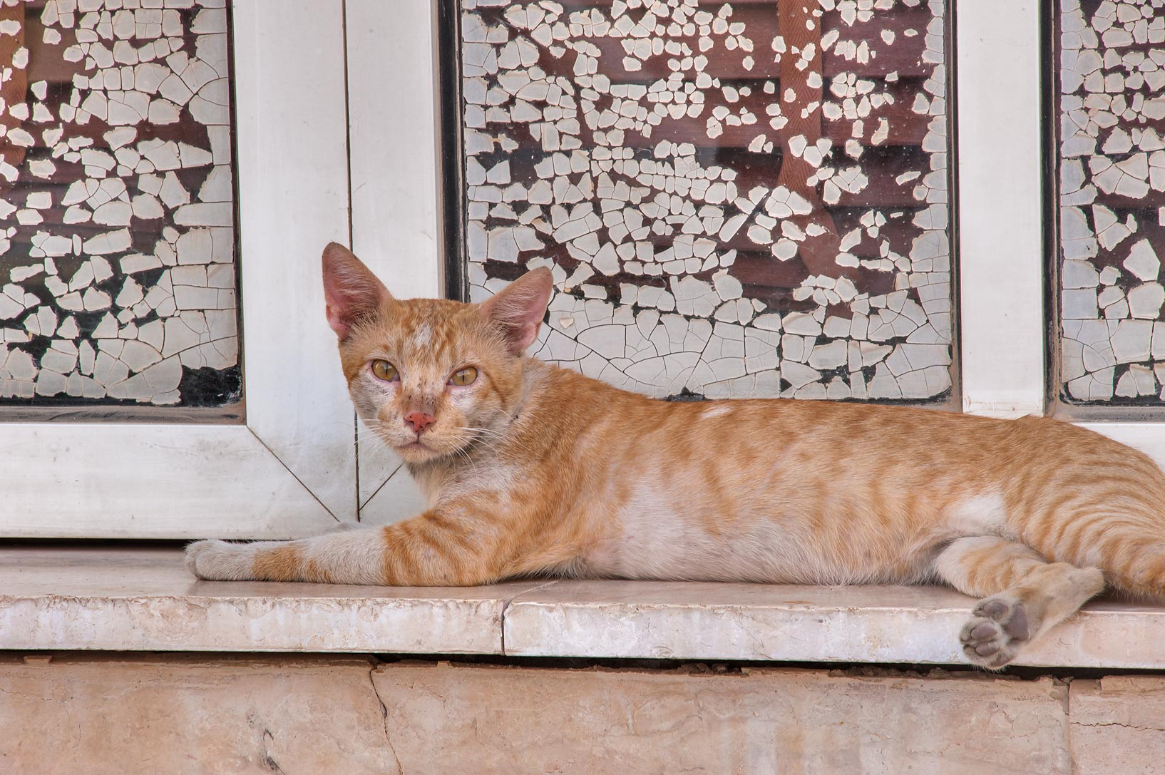 Brown cat on window sill on Ibn Hanbal St., Musheirib area. Doha, Qatar