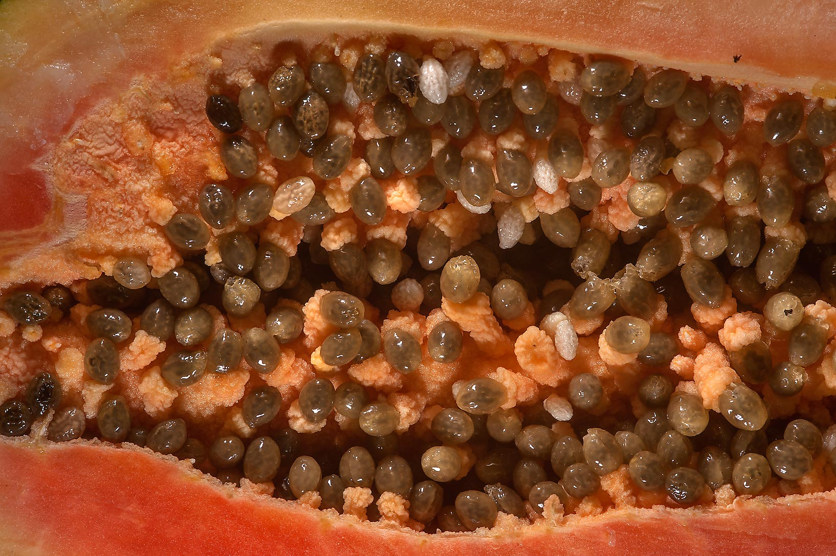 Seeds in a half of a fruit of Carica papaya taken from Carrefour Supermarket. Doha, Qatar