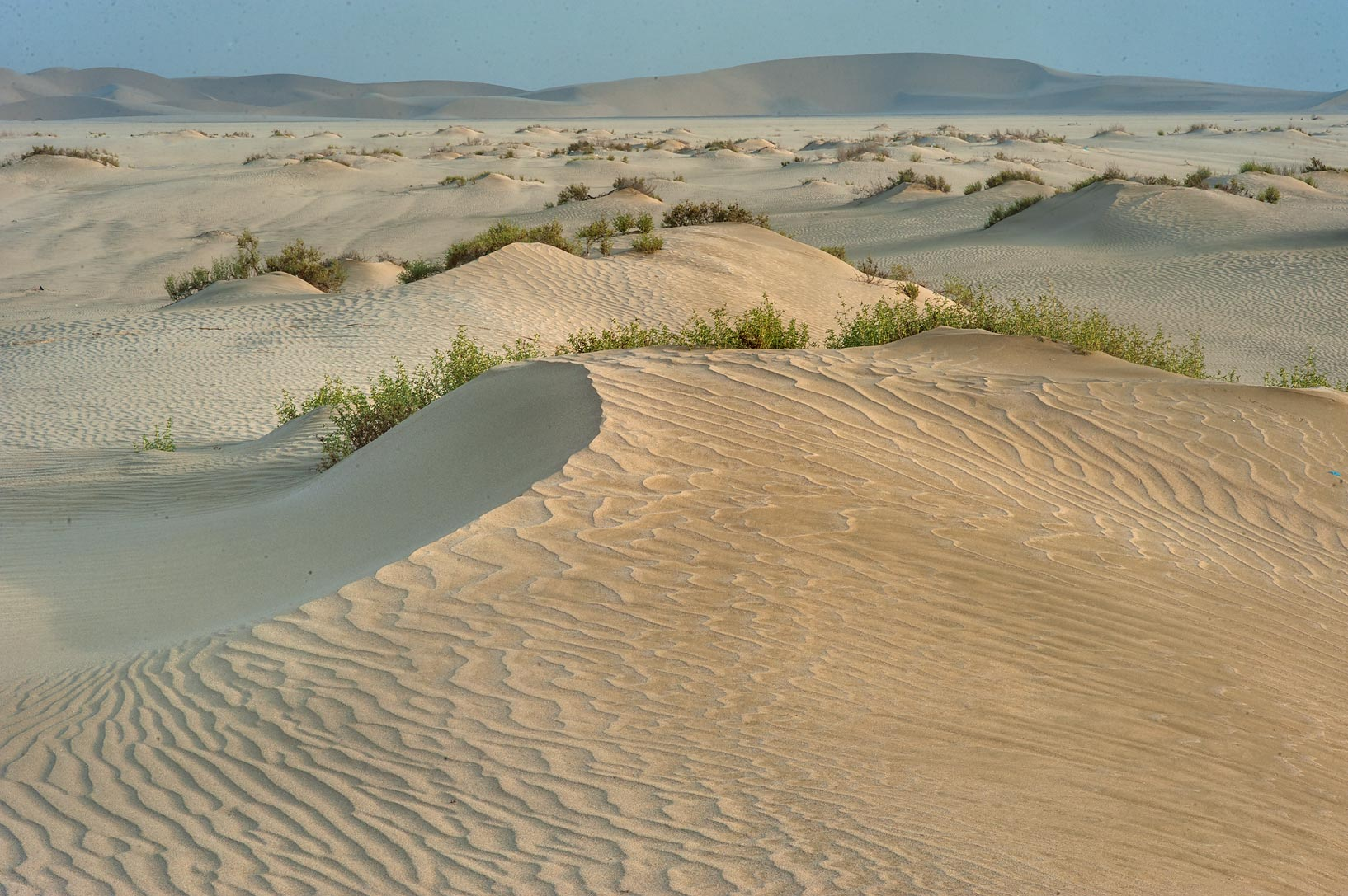 Sand mounds near Sealine Beach Resort near Mesaieed, view to north-west. Southern Qatar