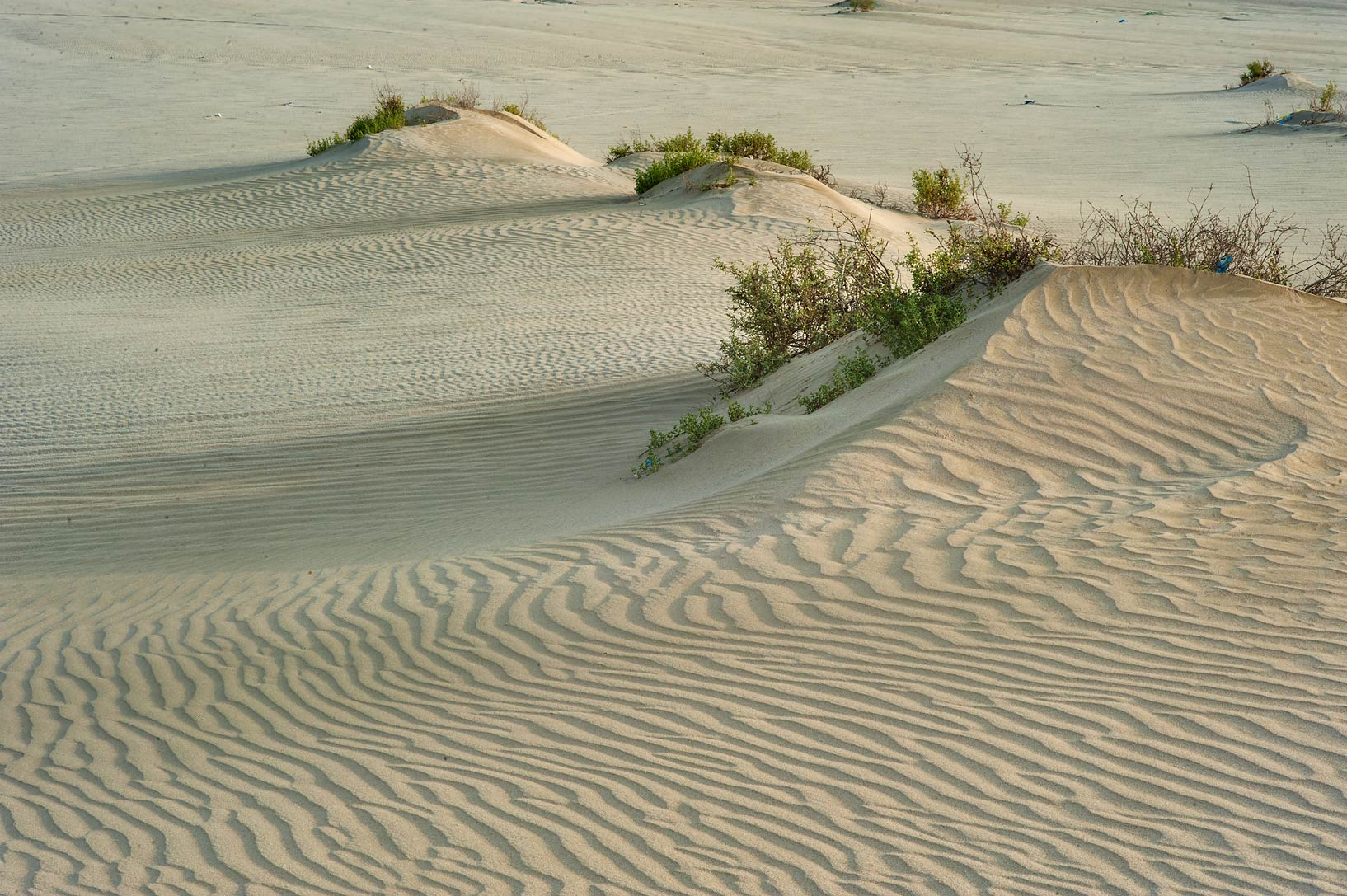 Sand ripples and sand mounds at sunrise near...view to north-west. Southern Qatar