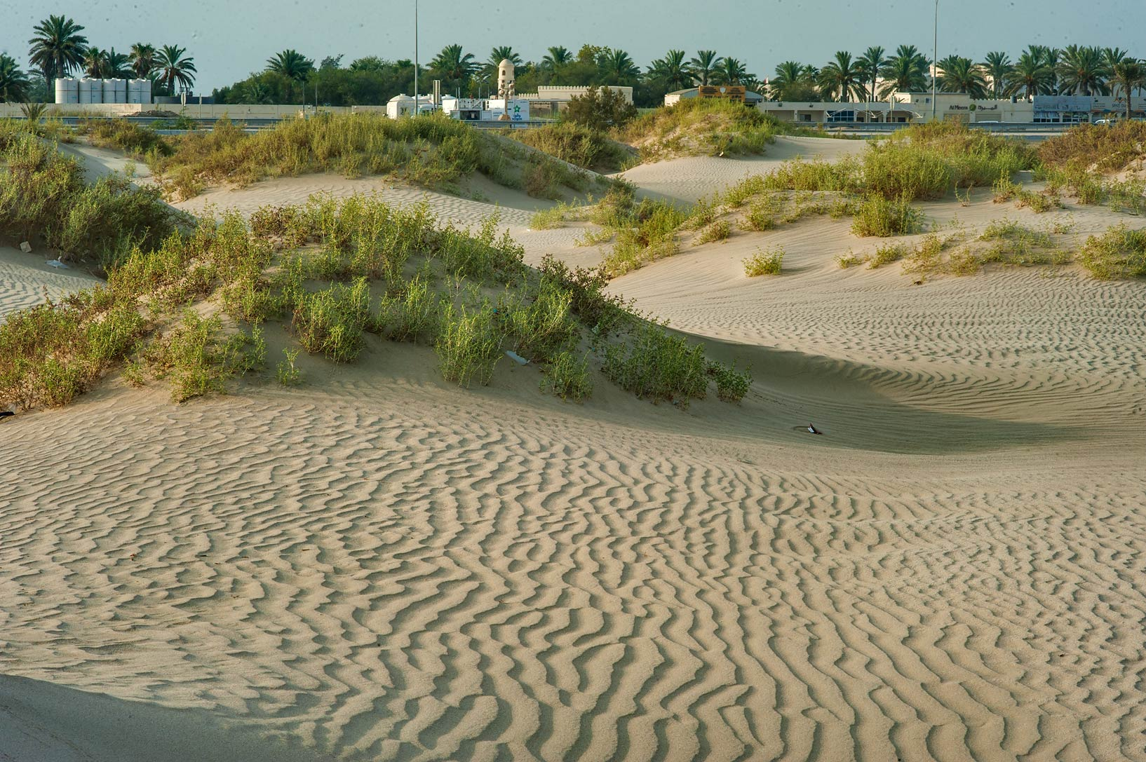 Sand mounds (habitat of Seidlitzia rosmarinus...view to south-east. Southern Qatar