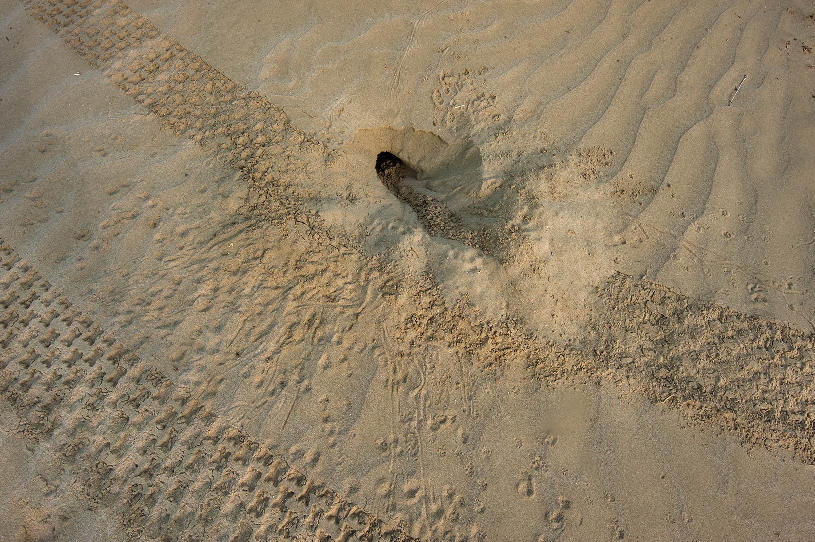 Lizard's burrow in sand near Mesaieed, near Sealine Beach Resort. Southern Qatar