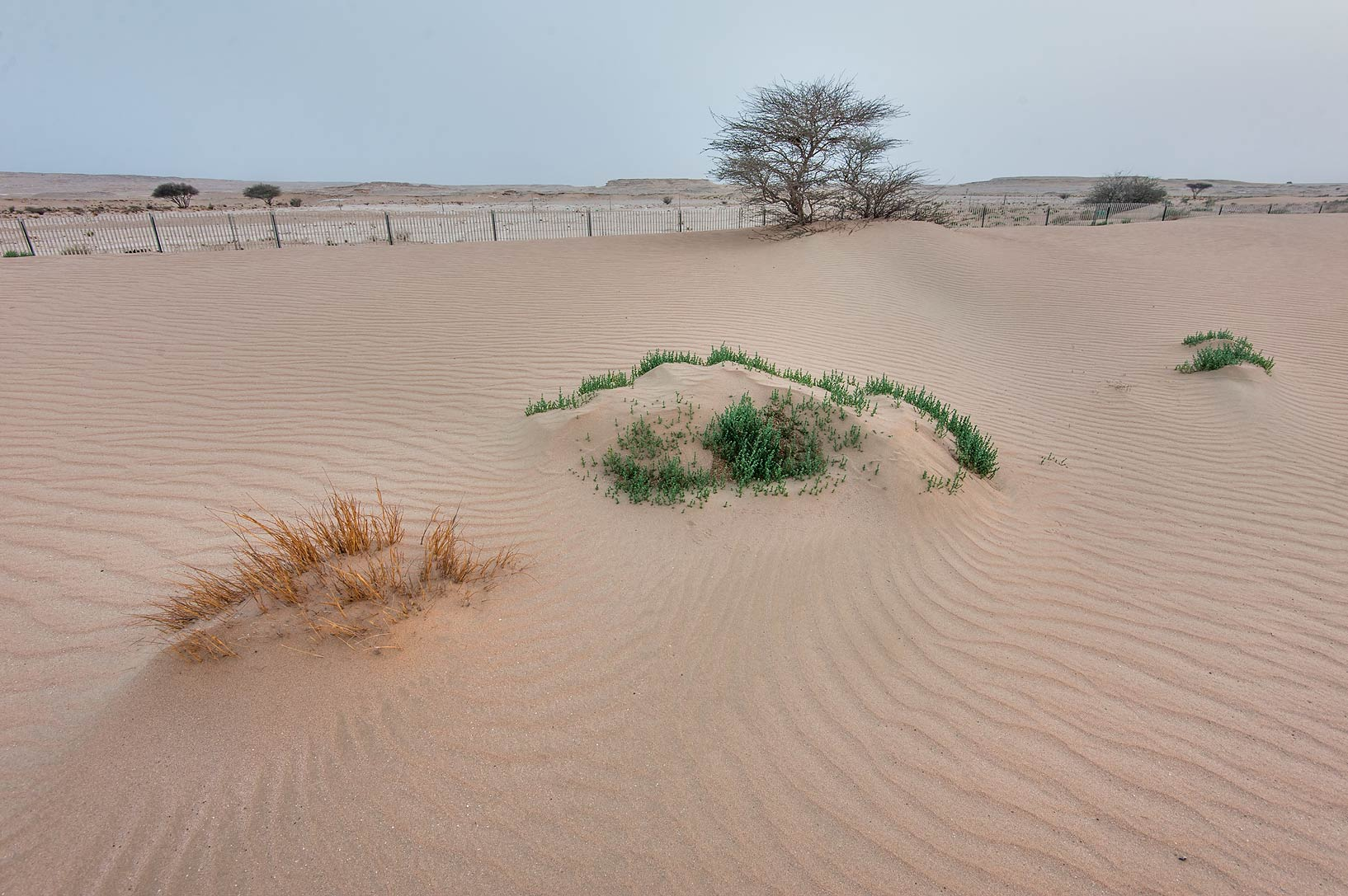 Windblown sand on roadside of Salwa Rd. in area of Khashem Al Nekhsh. Southern Qatar