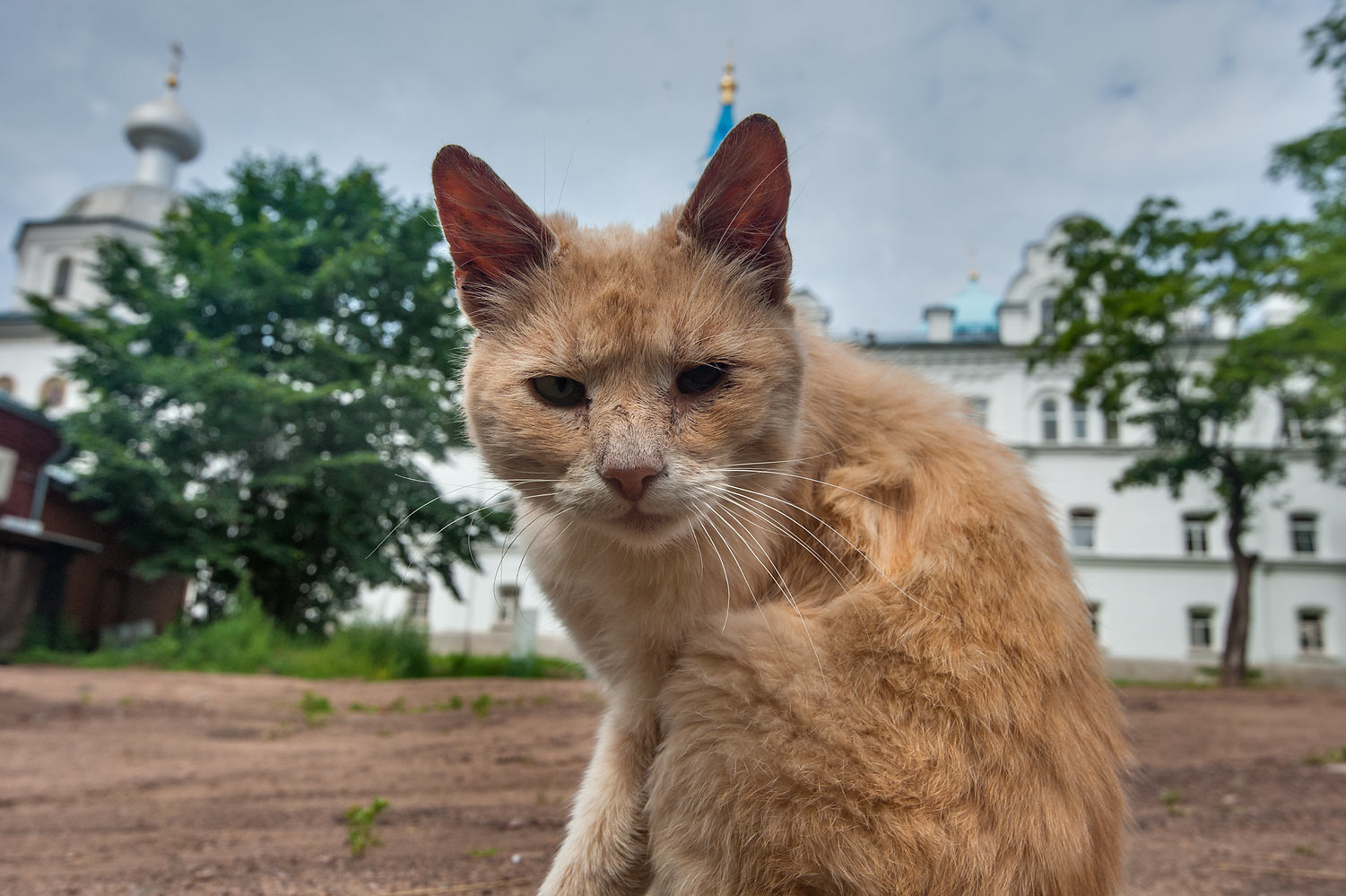 Brown cat near the entrance of Valaam Monastery, on Valaam Island. Karelia Region, Russia