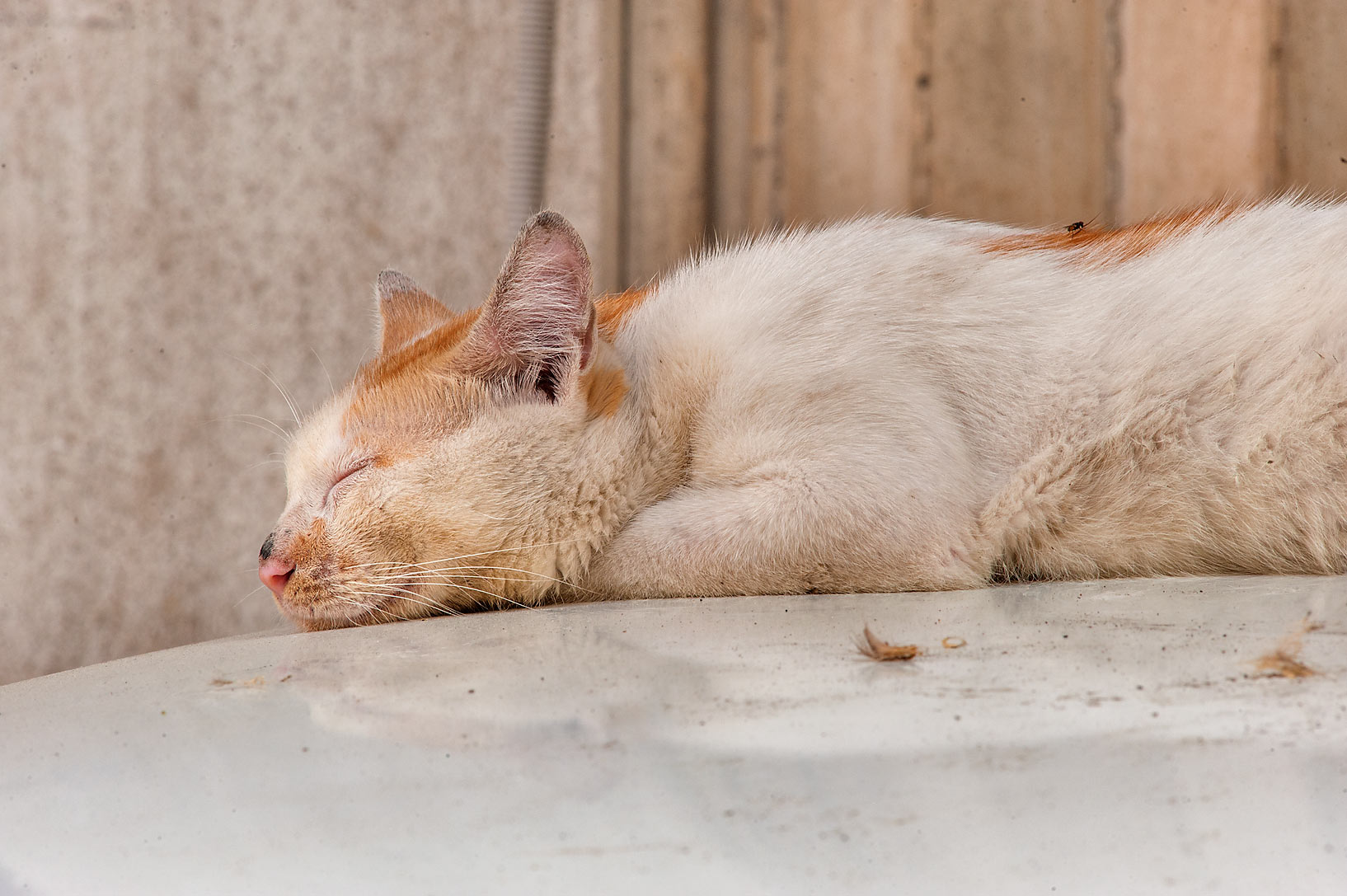 Sleeping cat near Abdullah Bin Thani St. in Musheirib (Msheireb) area. Doha, Qatar