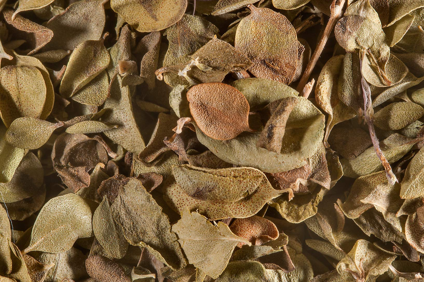 Some dry leaves in spice section in Souq Waqif (Old Market). Doha, Qatar