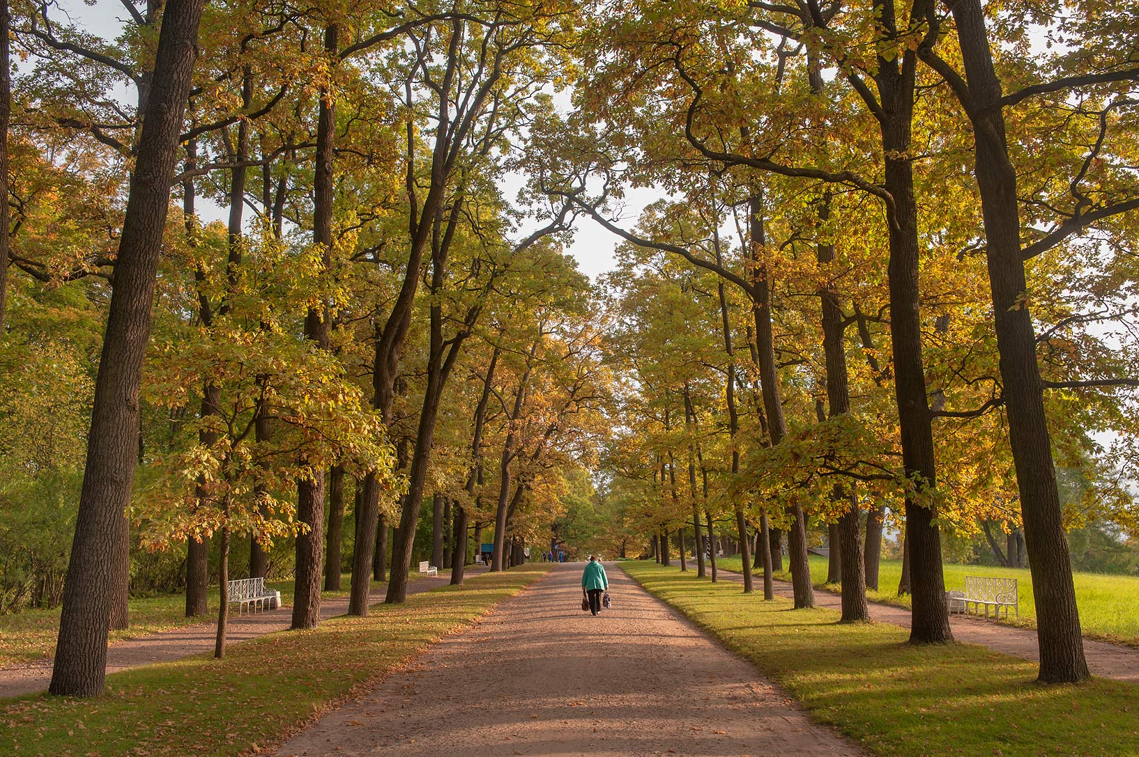 Maple alley in Catherine Park. Pushkin (former...south from St.Petersburg, Russia