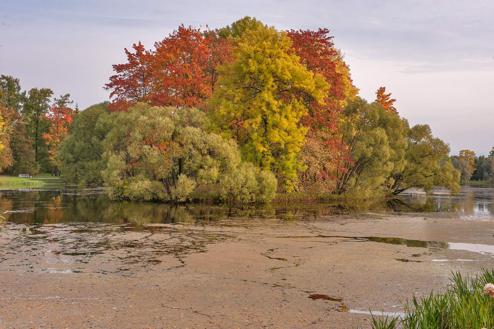 Fall colors of Empty Island of Great Pond in...south from St.Petersburg, Russia