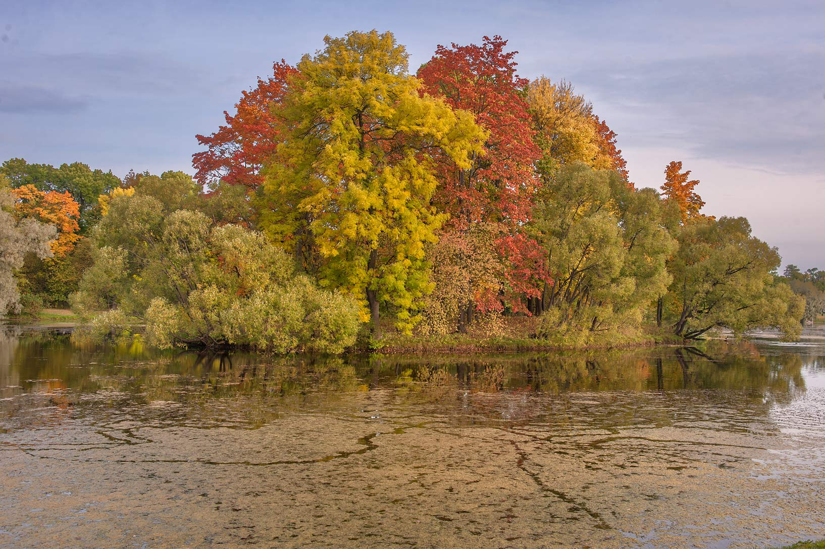 Trees on Empty Island of Great Pond in Catherine...south from St.Petersburg, Russia