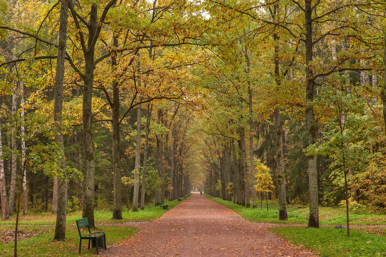 Oaks of Green Woman Alley in Pavlovsk Park. Pavlovsk, suburb of St.Petersburg, Russia