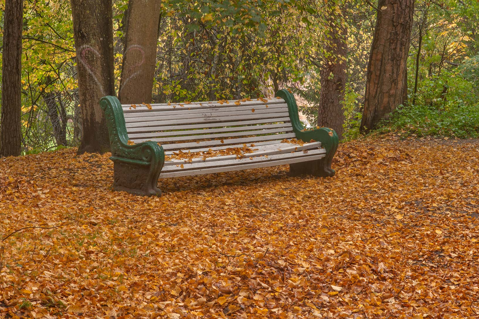 A bench in northern part of Old Sylvia in...suburb of St.Petersburg, Russia