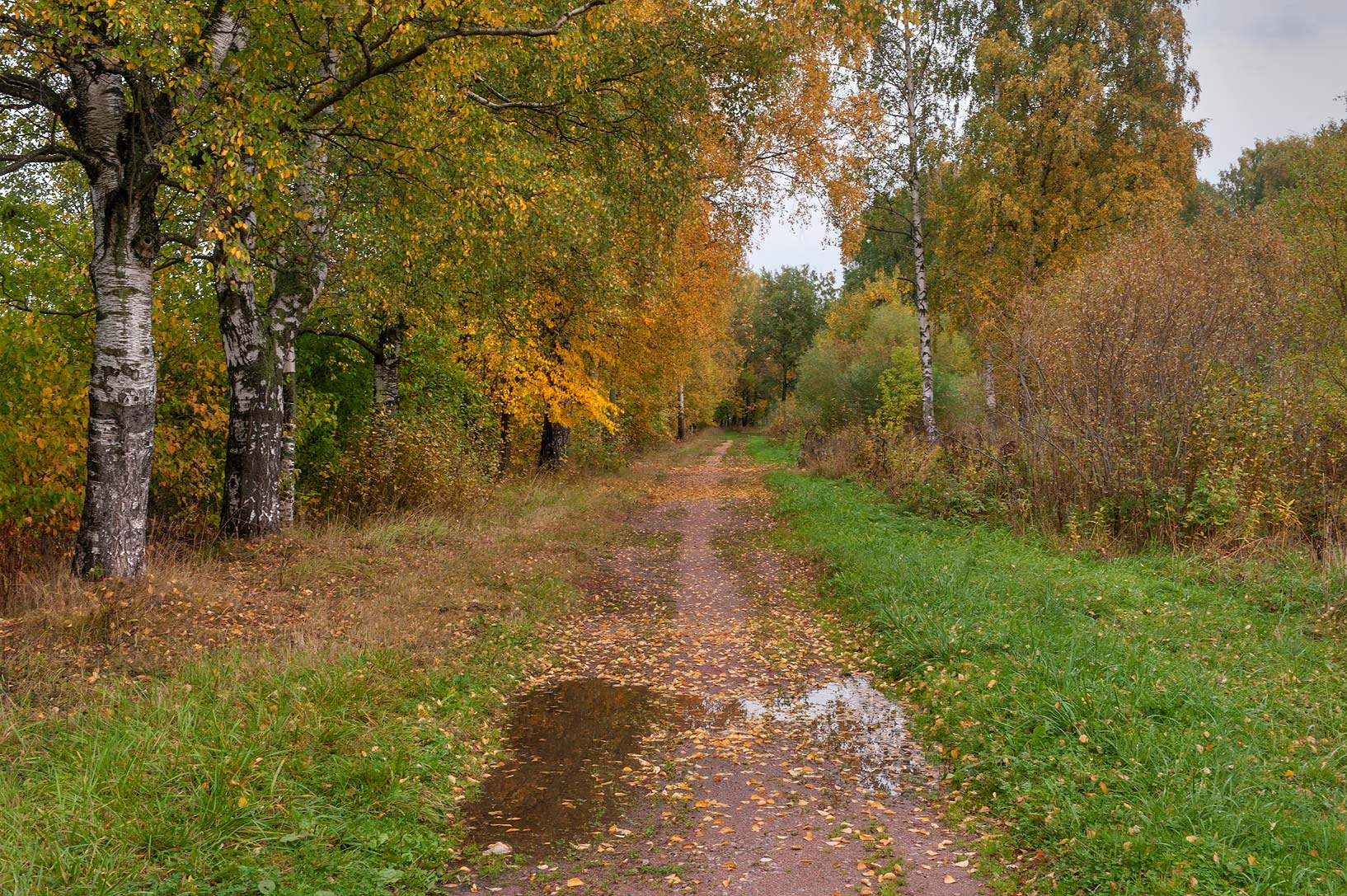 Road east from VIR Greenhouses in Pushkin (former...a suburb of St.Petersburg. Russia