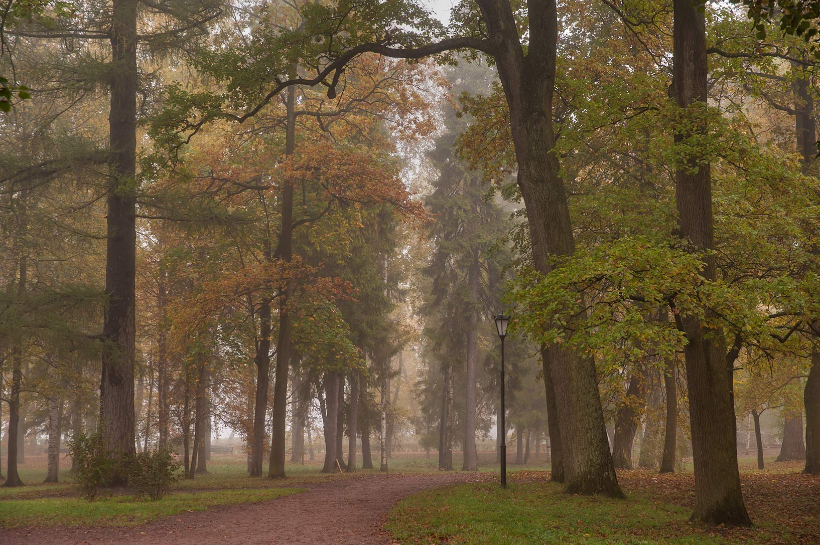 Alley in fog on eastern shore of Beloe Lake in Gatchina, a suburb of St.Petersburg. Russia
