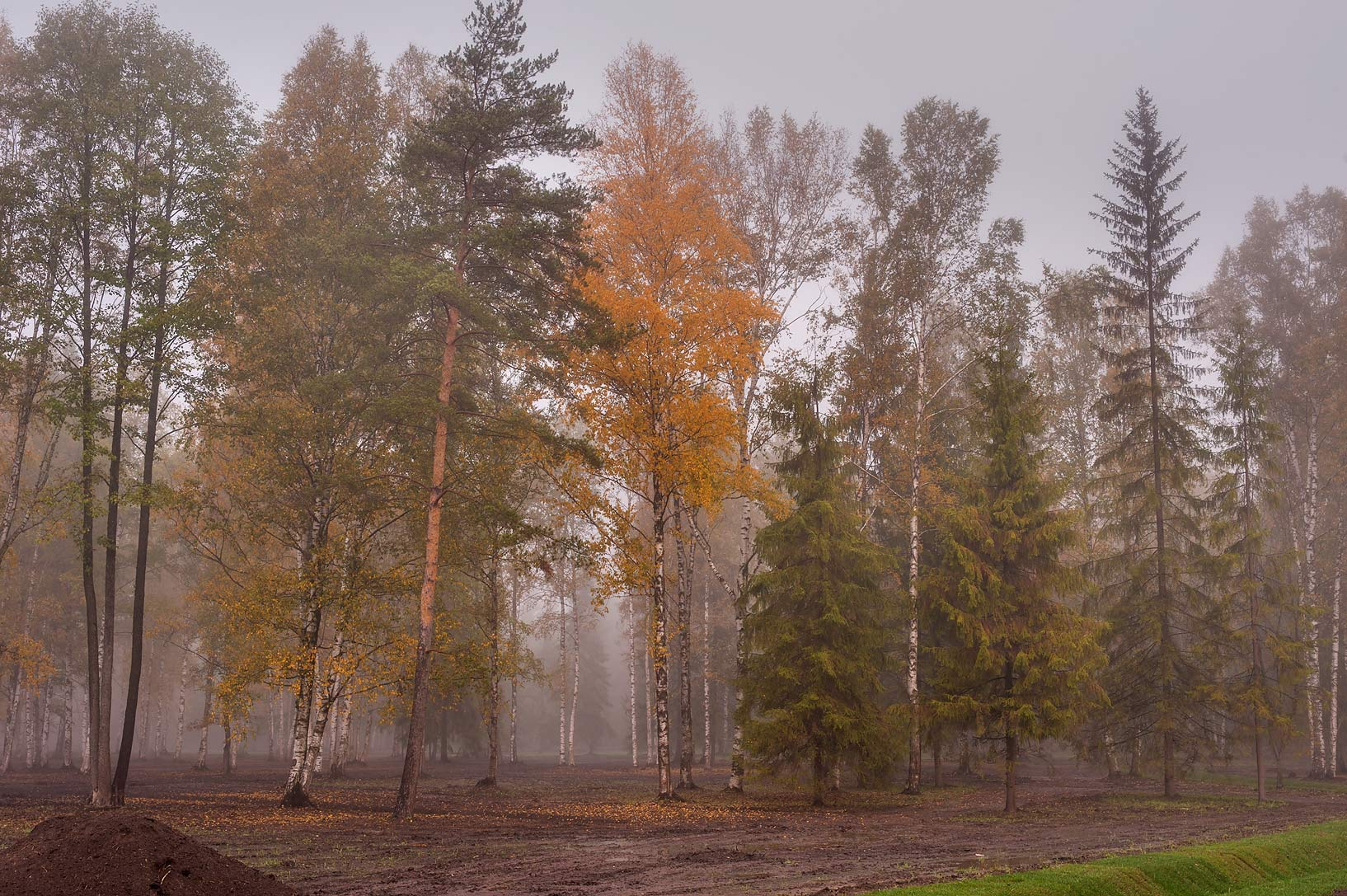 Trees in fog near northern end of Beloe Lake in...a suburb of St.Petersburg. Russia