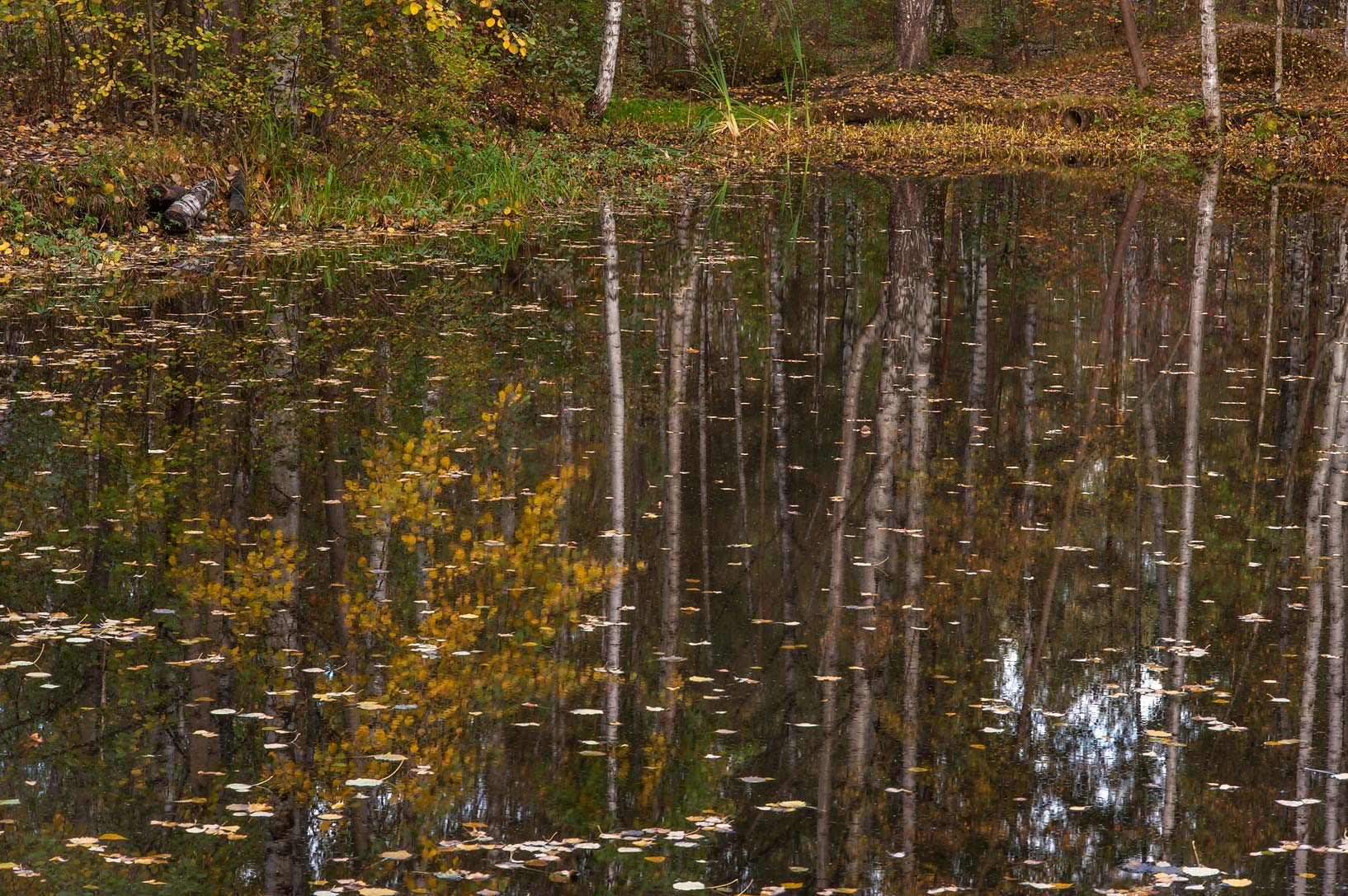 Reflections in a pond near Listvennaya Alley in Sosnovka Park. St.Petersburg, Russia