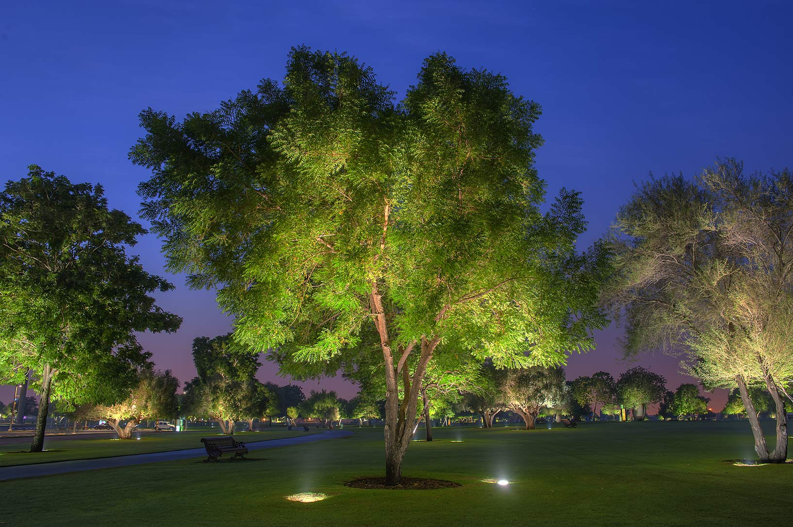 Illuminated tree in Aspire Park at morning. Doha, Qatar