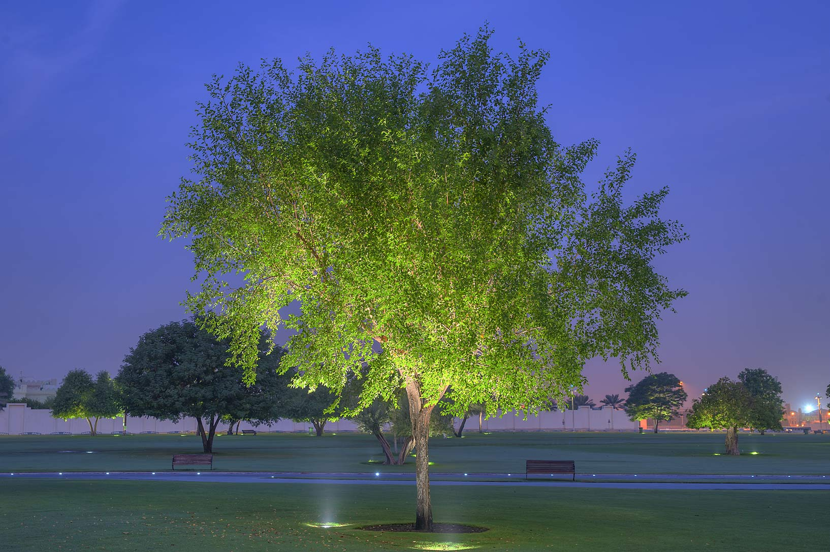 Green tree in Aspire Park at morning. Doha, Qatar