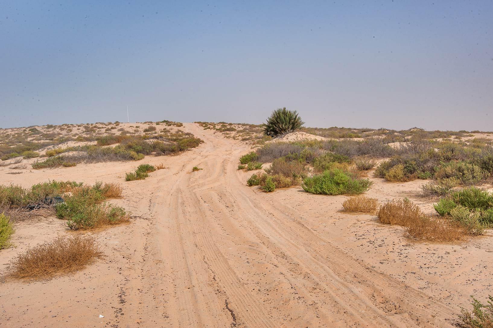 photo 167805 dead camel southeast from abu samra in