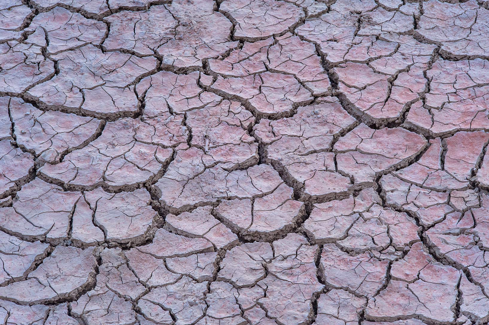 Caked mud in a depression on roadside of a road...of Al Magdah farms. Northern Qatar