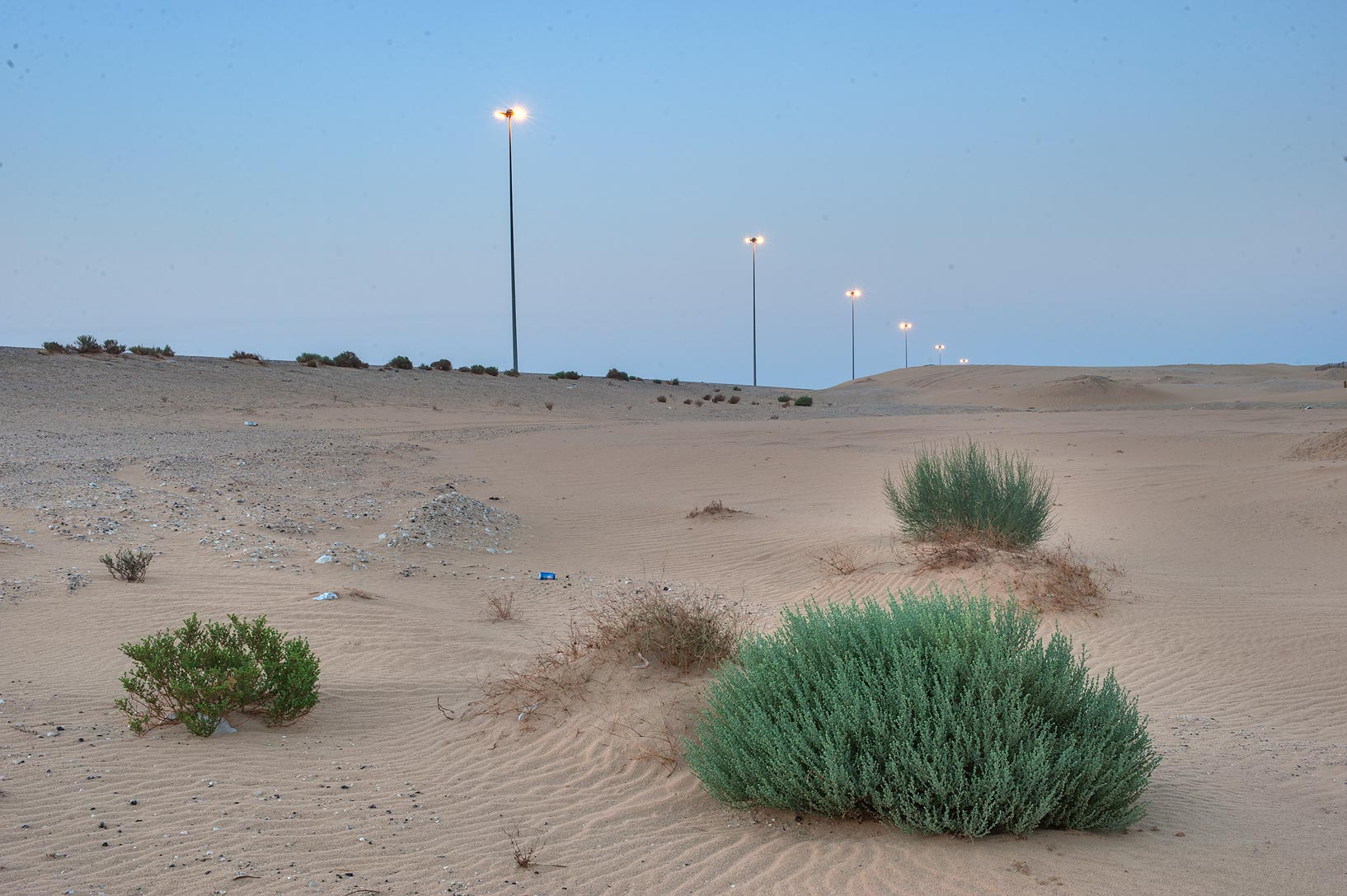 Plants in windblown sand on roadside of Salwa Rd. in area of Khashem Al Nekhsh. Qatar