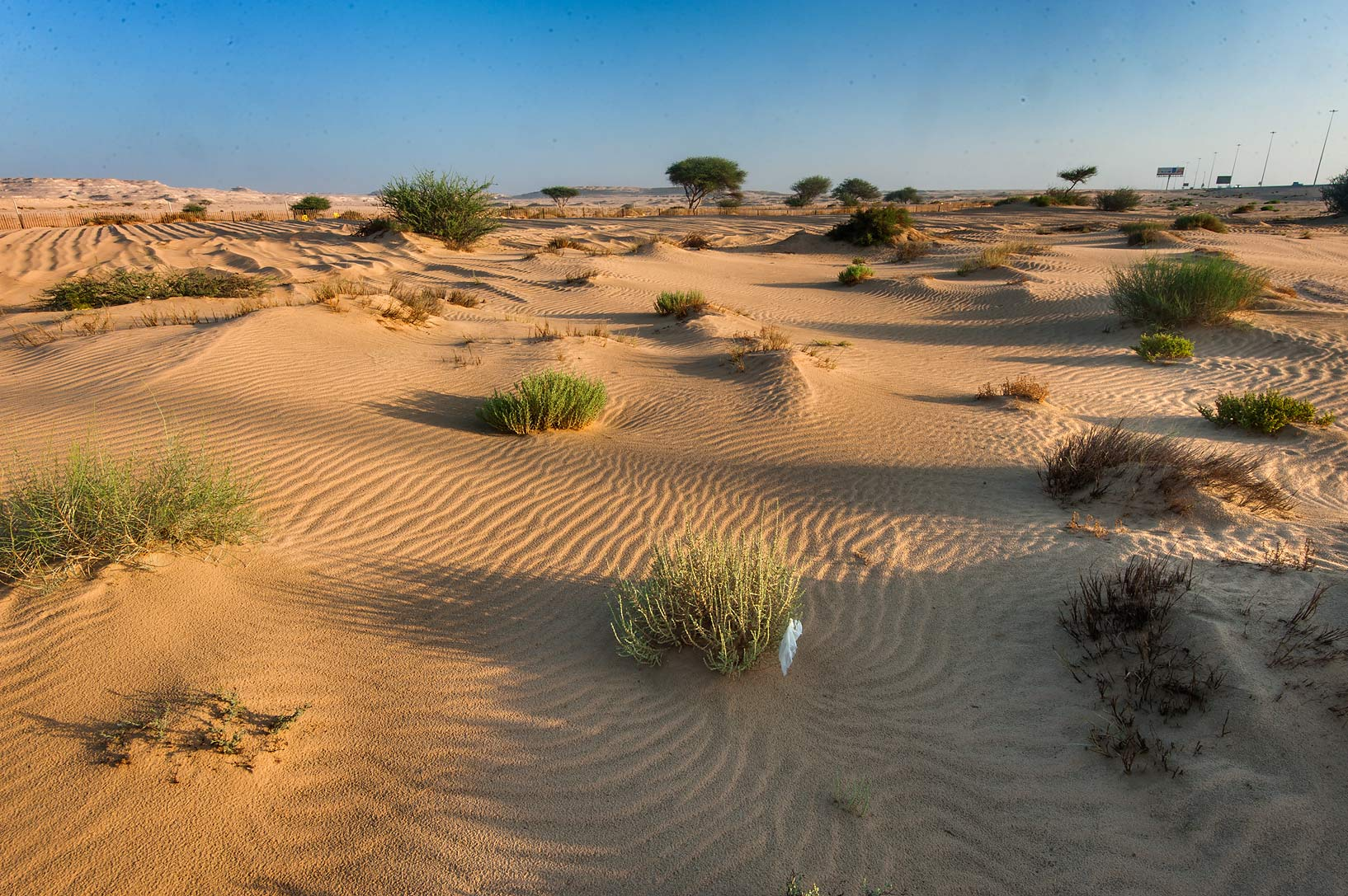 Small bushes in windblown sand at sunrise from...in area of Khashem Al Nekhsh. Qatar