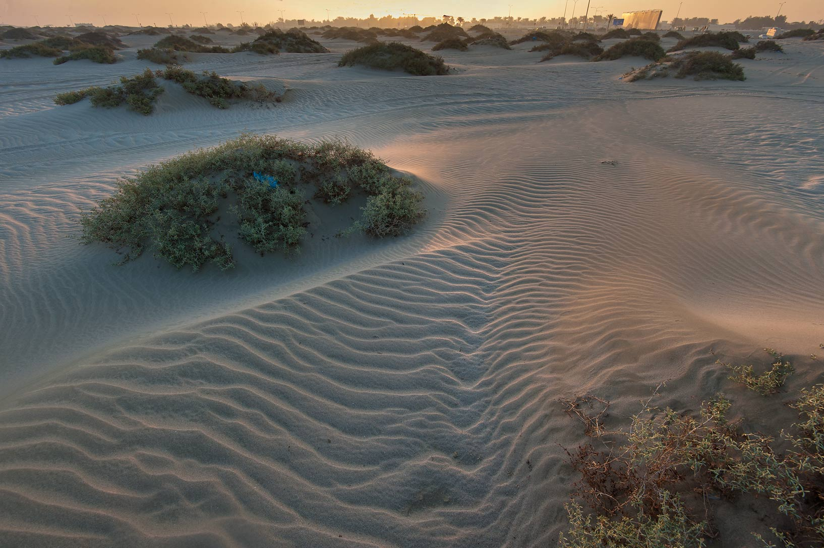 Sand mounds with plants of Seidlitzia at sunrise...Resort near Mesaieed. Southern Qatar