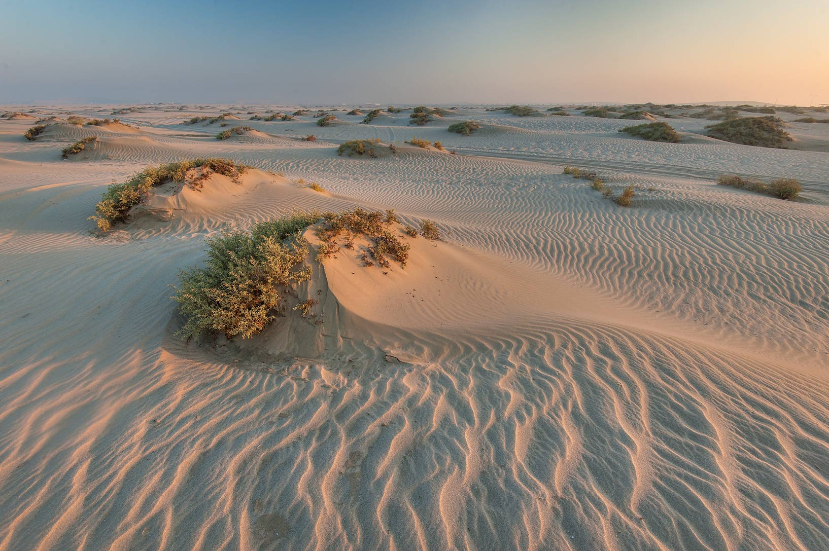 Sand mounds with plants of Seidlitzia rosmarinus...Resort near Mesaieed. Southern Qatar