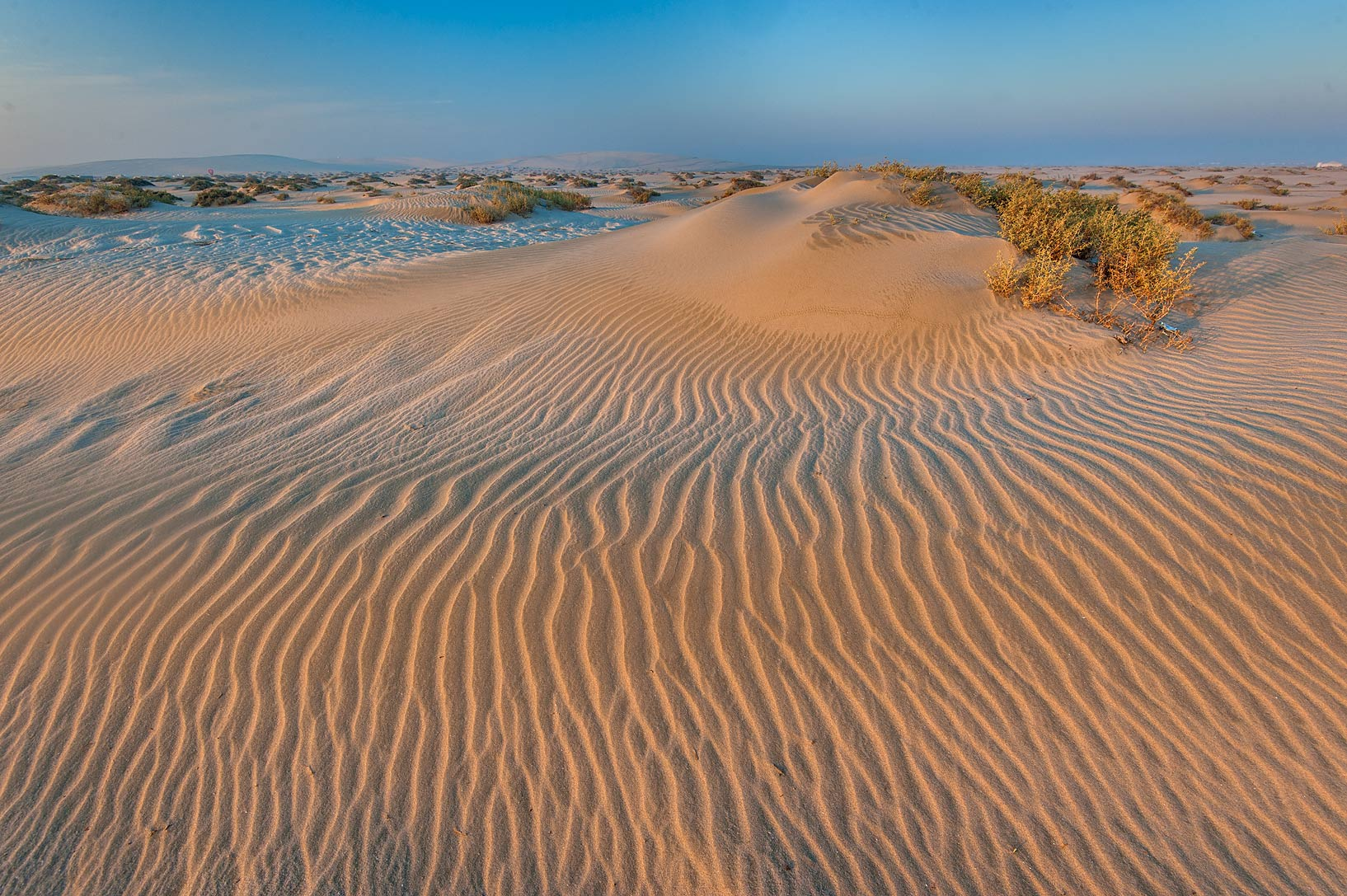 Field of windblown sand at sunrise near Sealine Beach Resort near Mesaieed. Southern Qatar