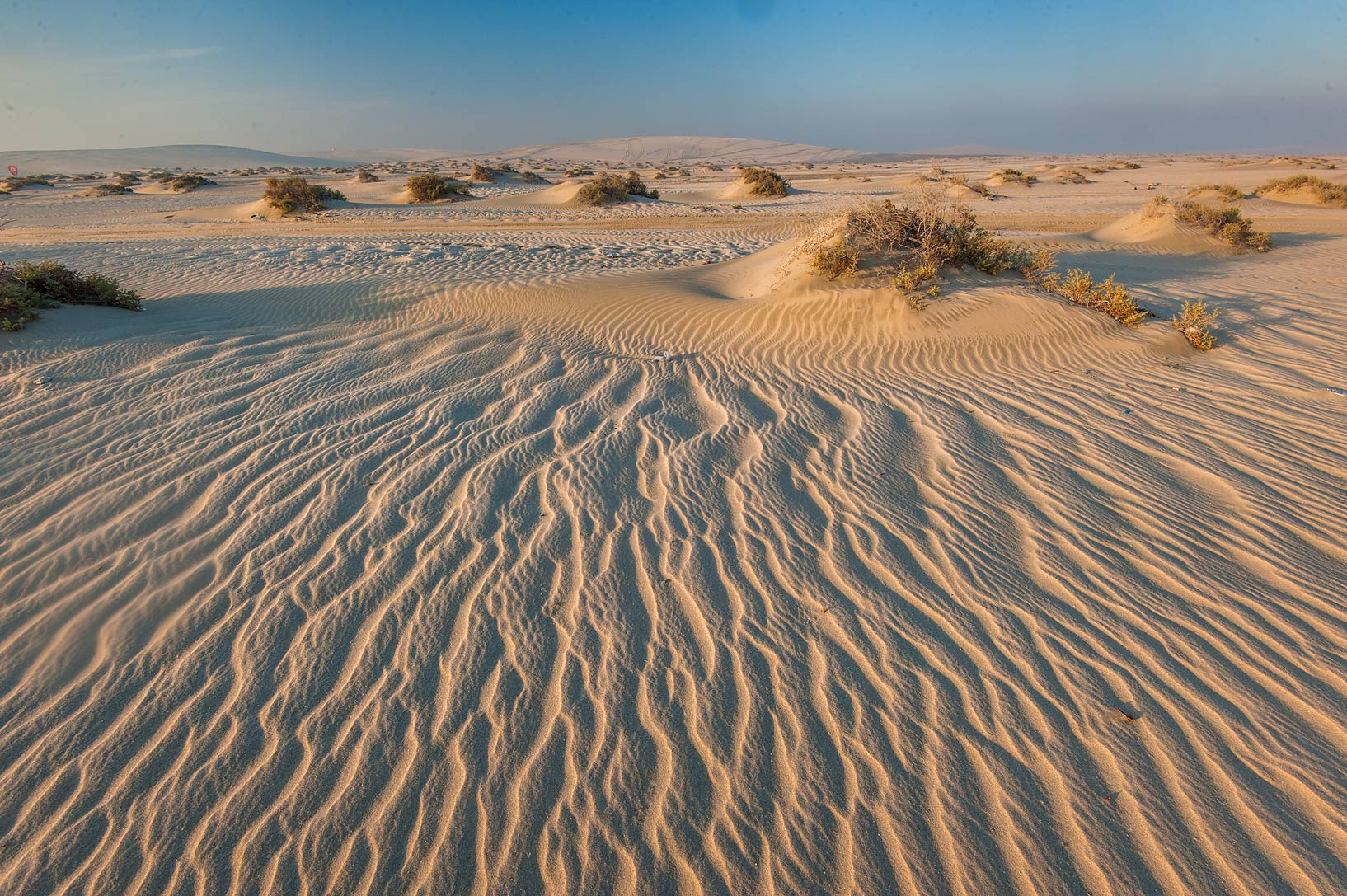 Wavy sand ripples and low mounds with plants of...Resort near Mesaieed. Southern Qatar