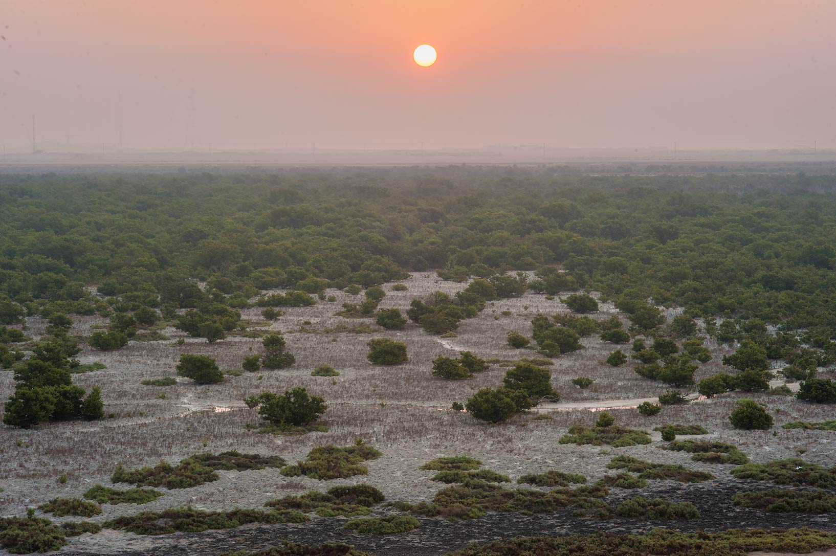 Sunrise over mangrove forest, view to the east...Jazirat Bin Ghanim). Al Khor, Qatar