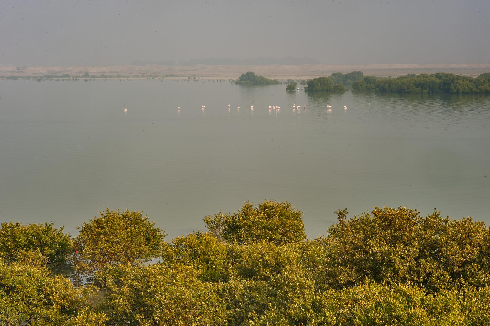 Mangrove forest and flamingo birds on north side...Jazirat Bin Ghanim). Al Khor, Qatar