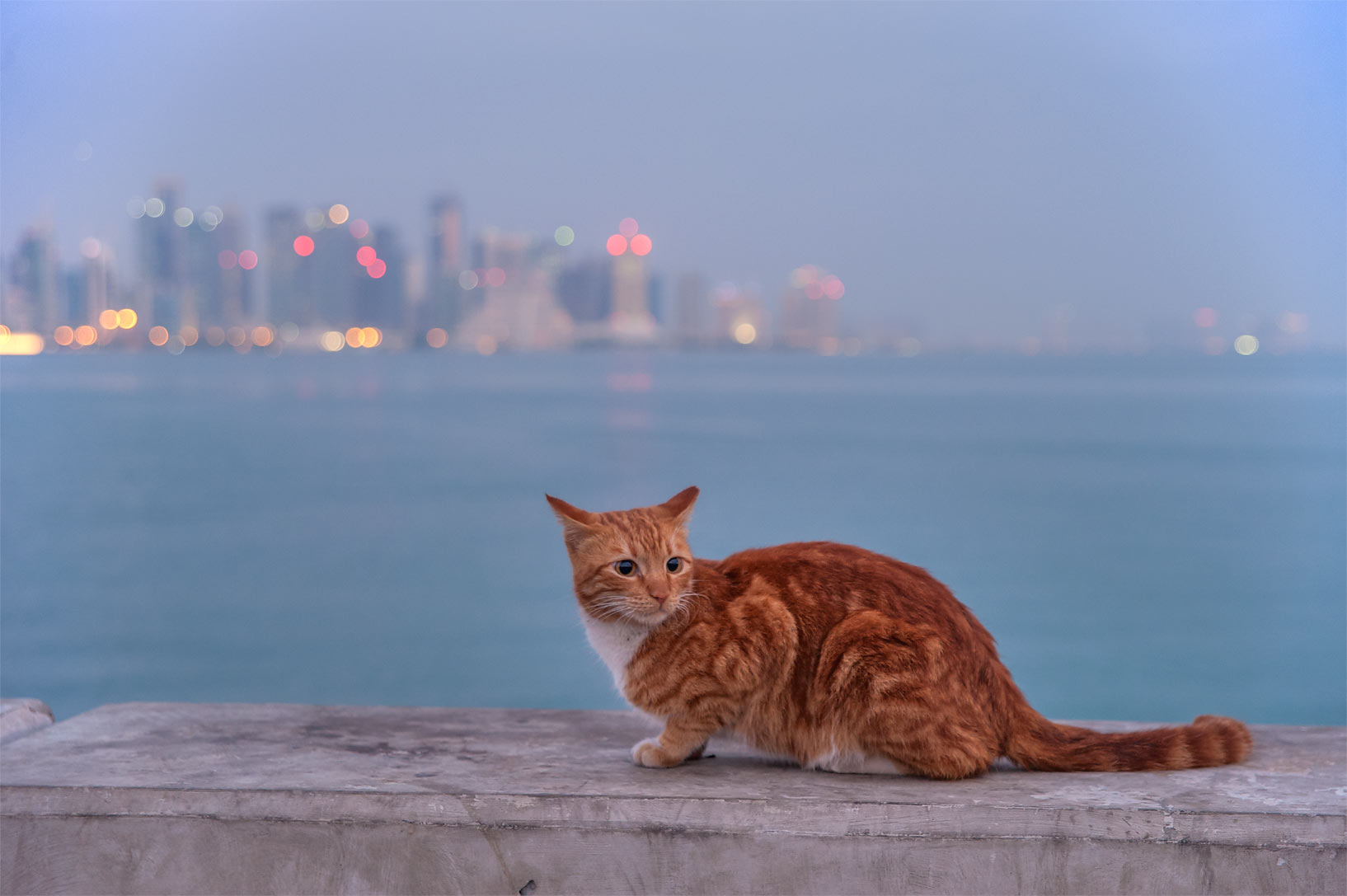 Brown cat resting at the end of fishing pier near Corniche. Doha, Qatar