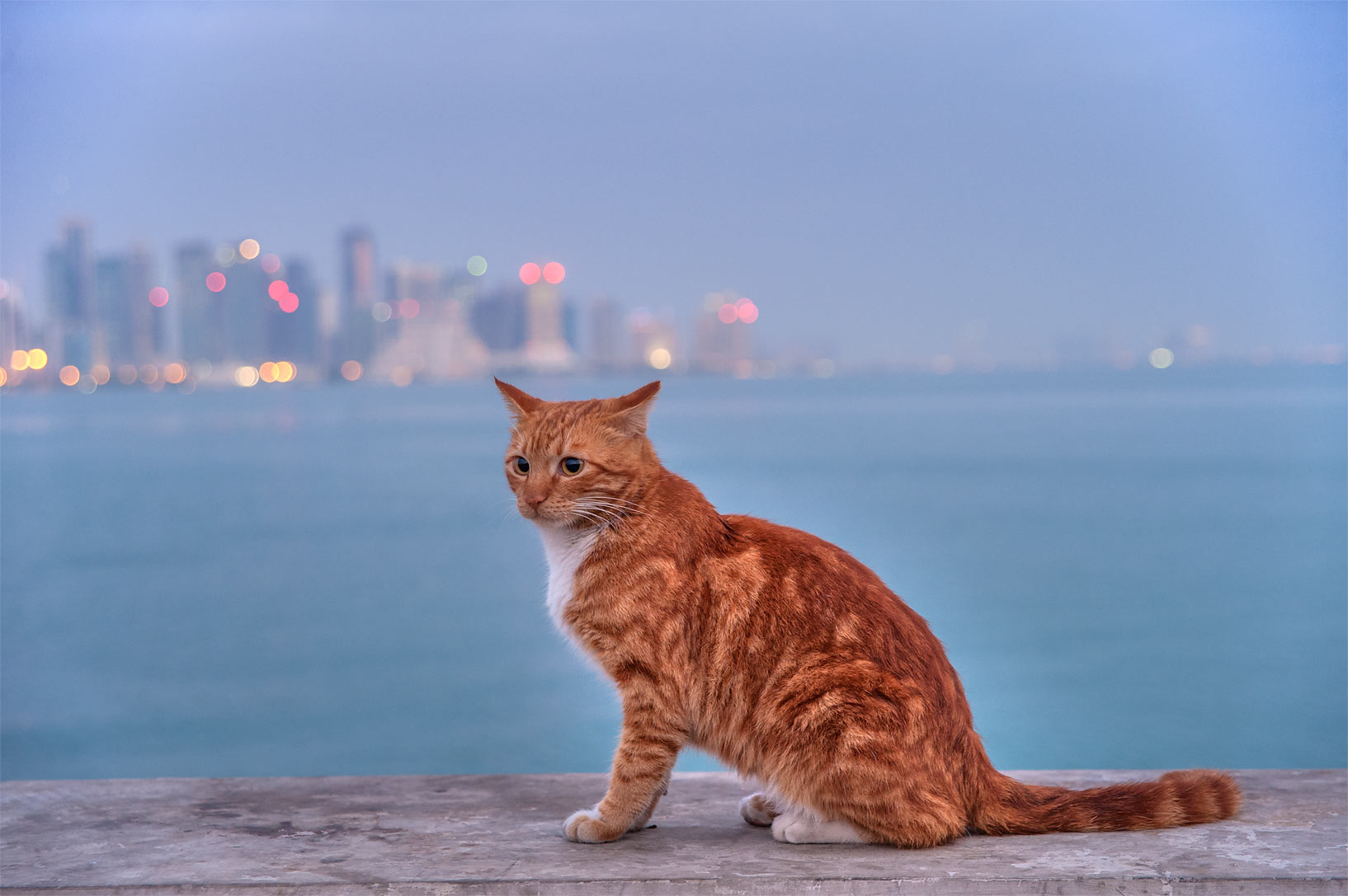 Brown cat sitting at the end of fishing pier near Corniche. Doha, Qatar