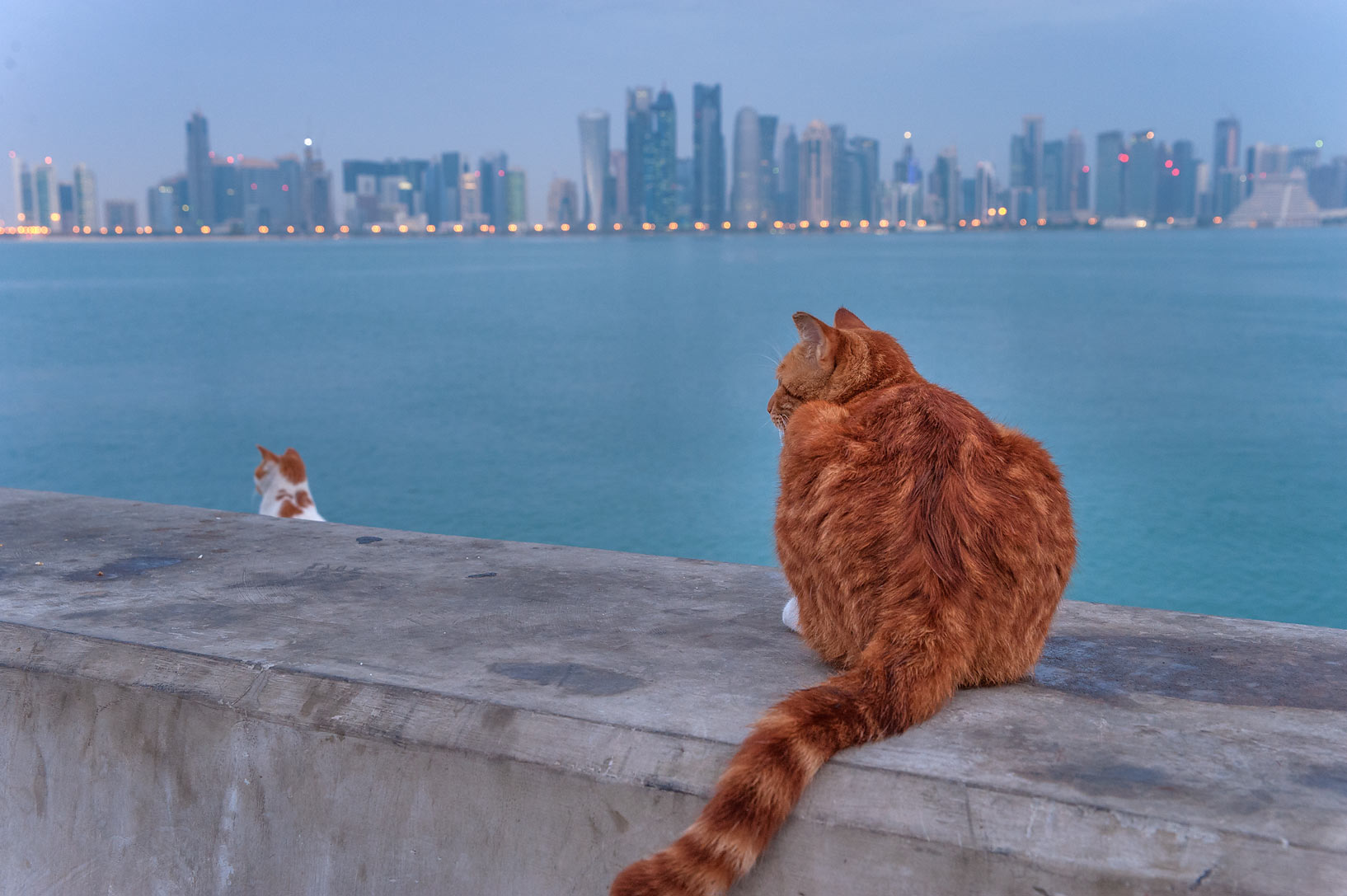 Brown cats watching sunrise from a stone barrier...pier near Corniche. Doha, Qatar