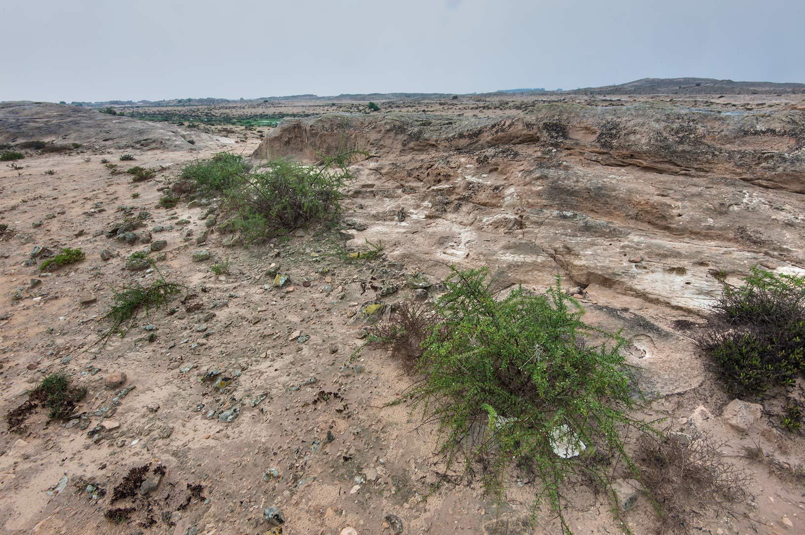 Rocky ridge at rain in Jabal Al Jassasiya site, on north-eastern coast. Qatar