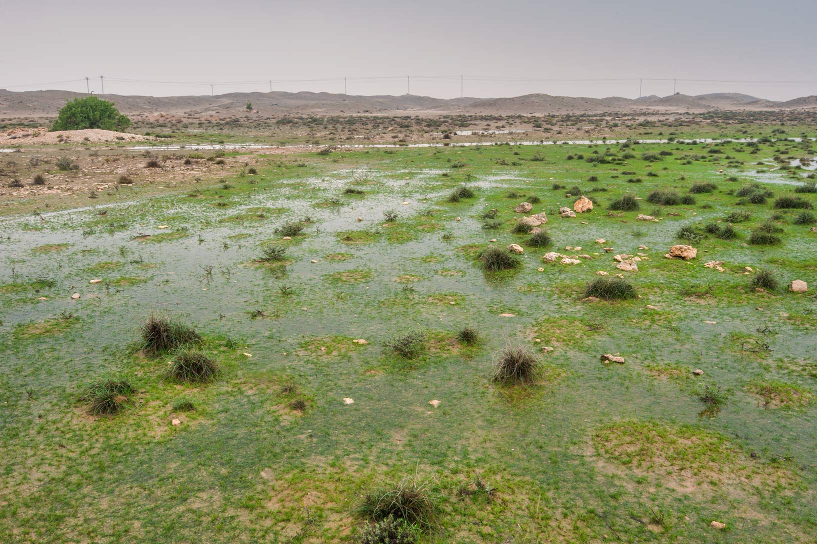 Wet depression near Jabal Al Jassasiya, on north-eastern coast. Qatar