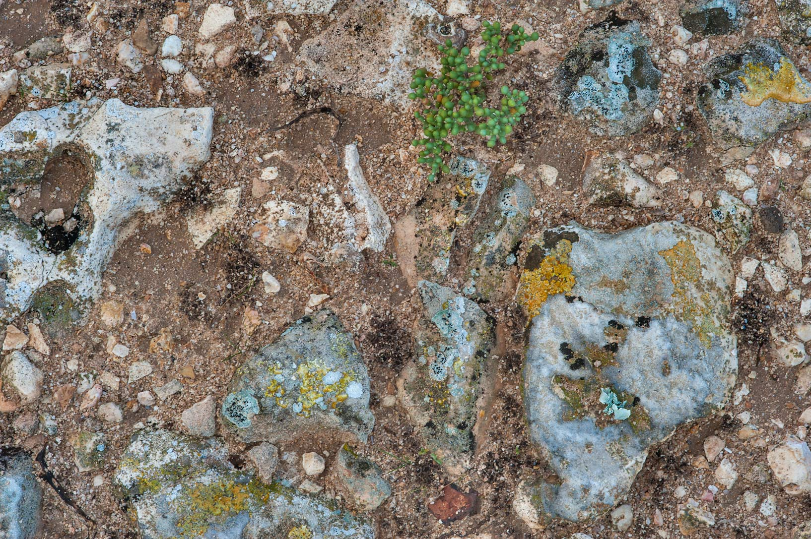 Soil texture near Jabal Al Jassasiya, on north-eastern coast. Qatar